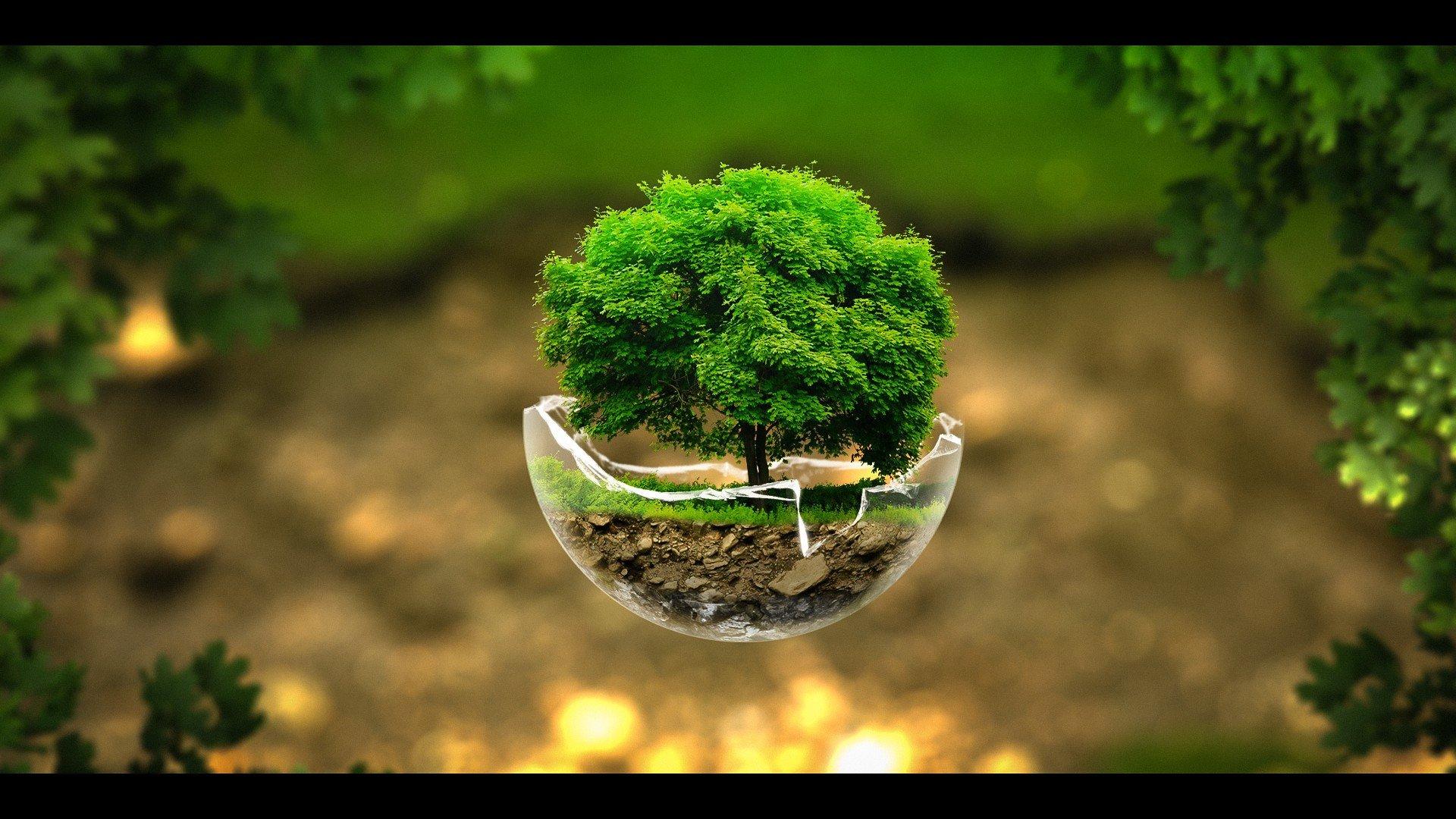 Unduh 61 Background Hd Tree HD Gratis