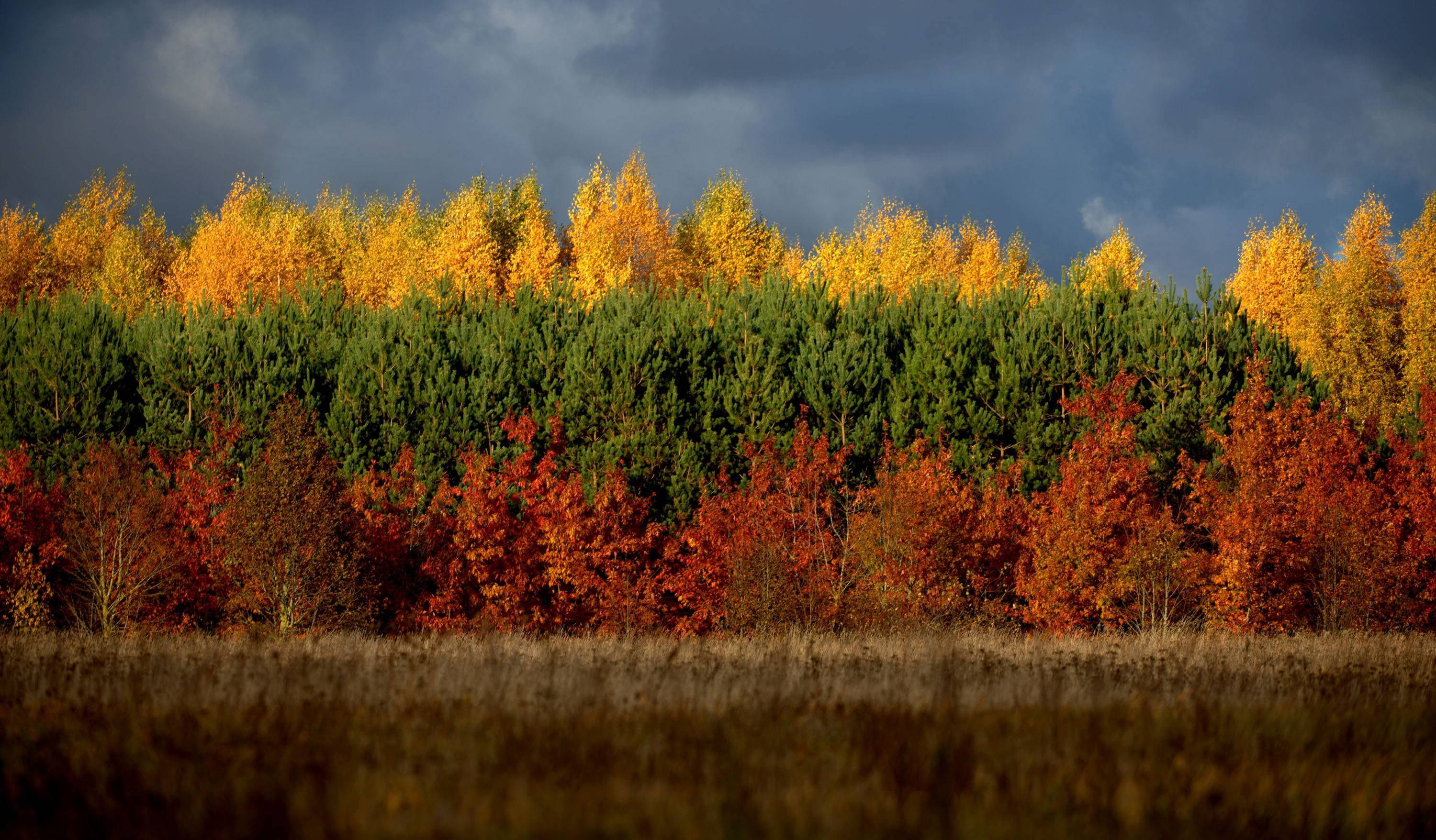 Autumn in Lithuania wallpaper