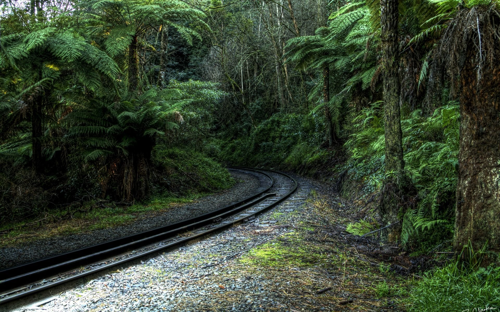 Tropical Forest Railway Landscape Hd Wallpaper