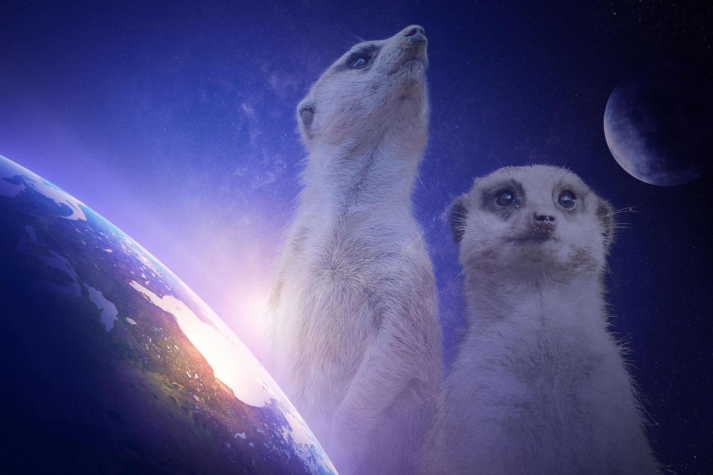Cosmic Meerkats Because Why Not Hd Wallpaper