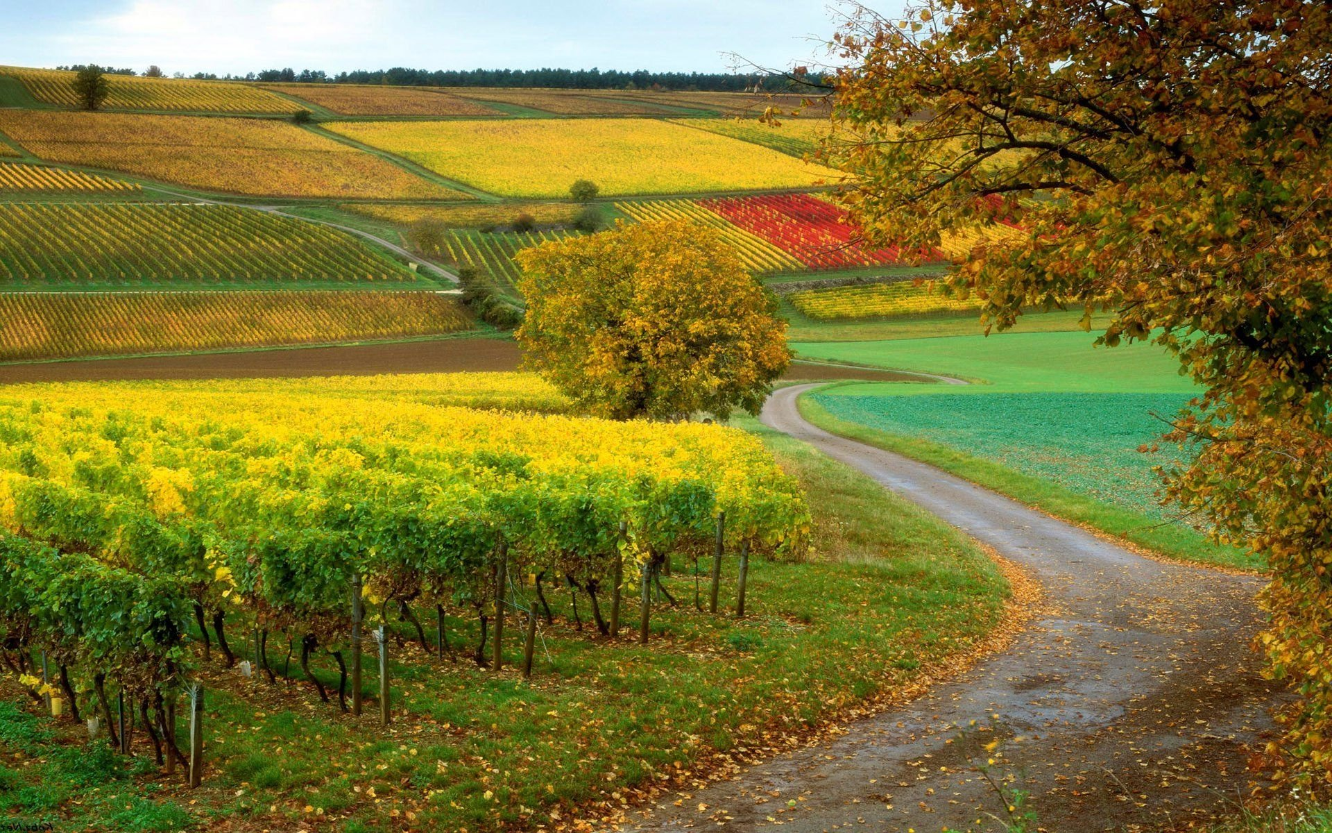 vineyard wallpapers photos and desktop backgrounds up to