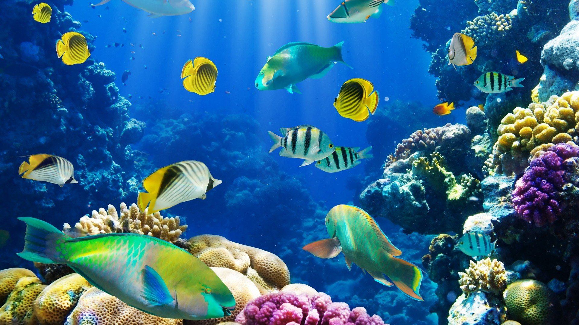 Beautiful Fishes In Water Hd Wallpaper