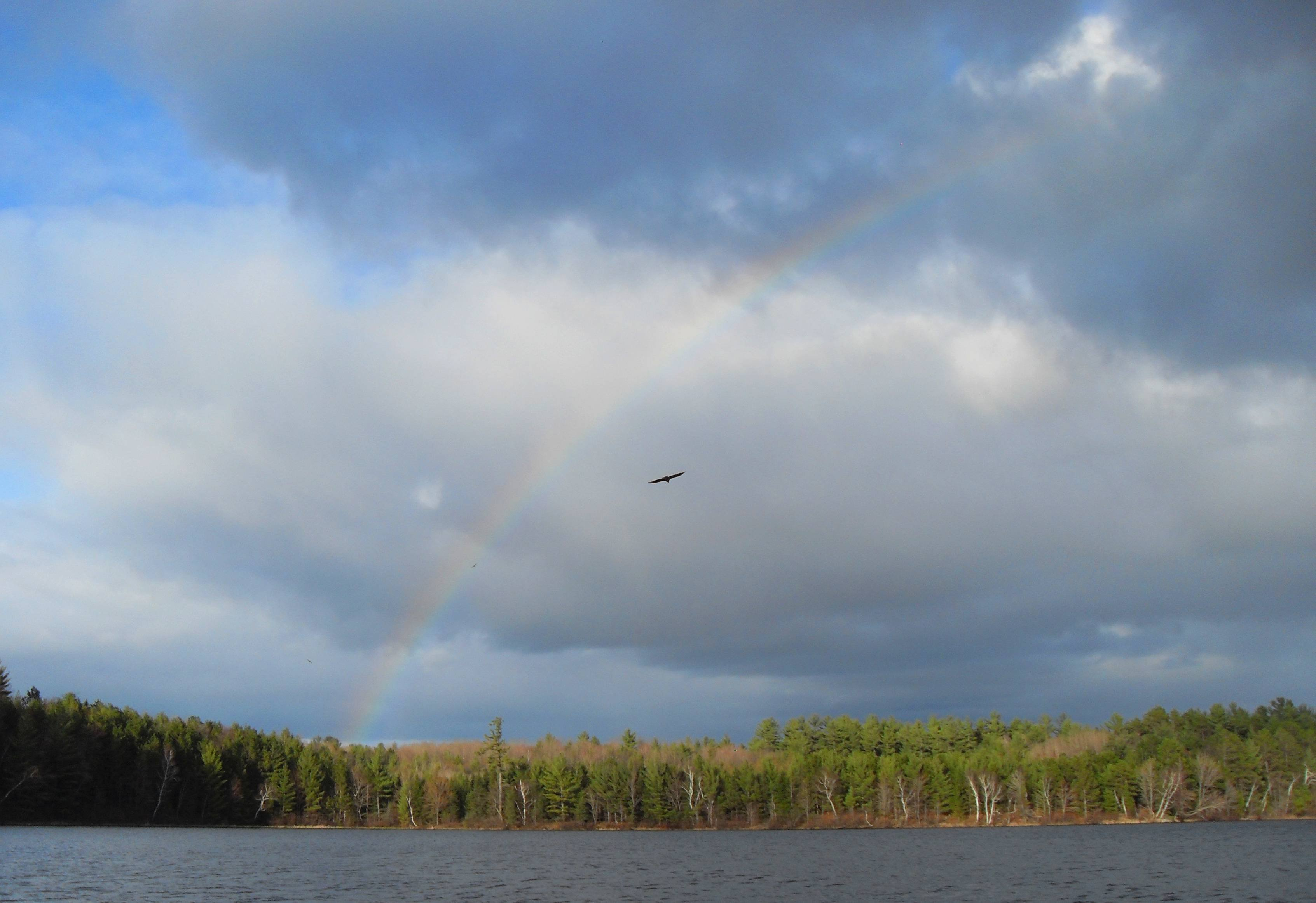 Bald Eagles and Rainbow Over Gilmore Lake Oneida County WI wallpaper