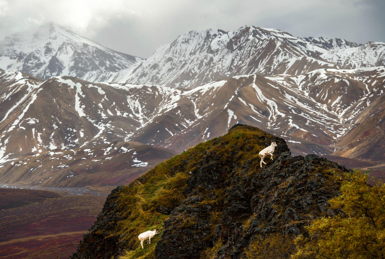 Traveling Thru Denali National Park Alaska Wallpaper