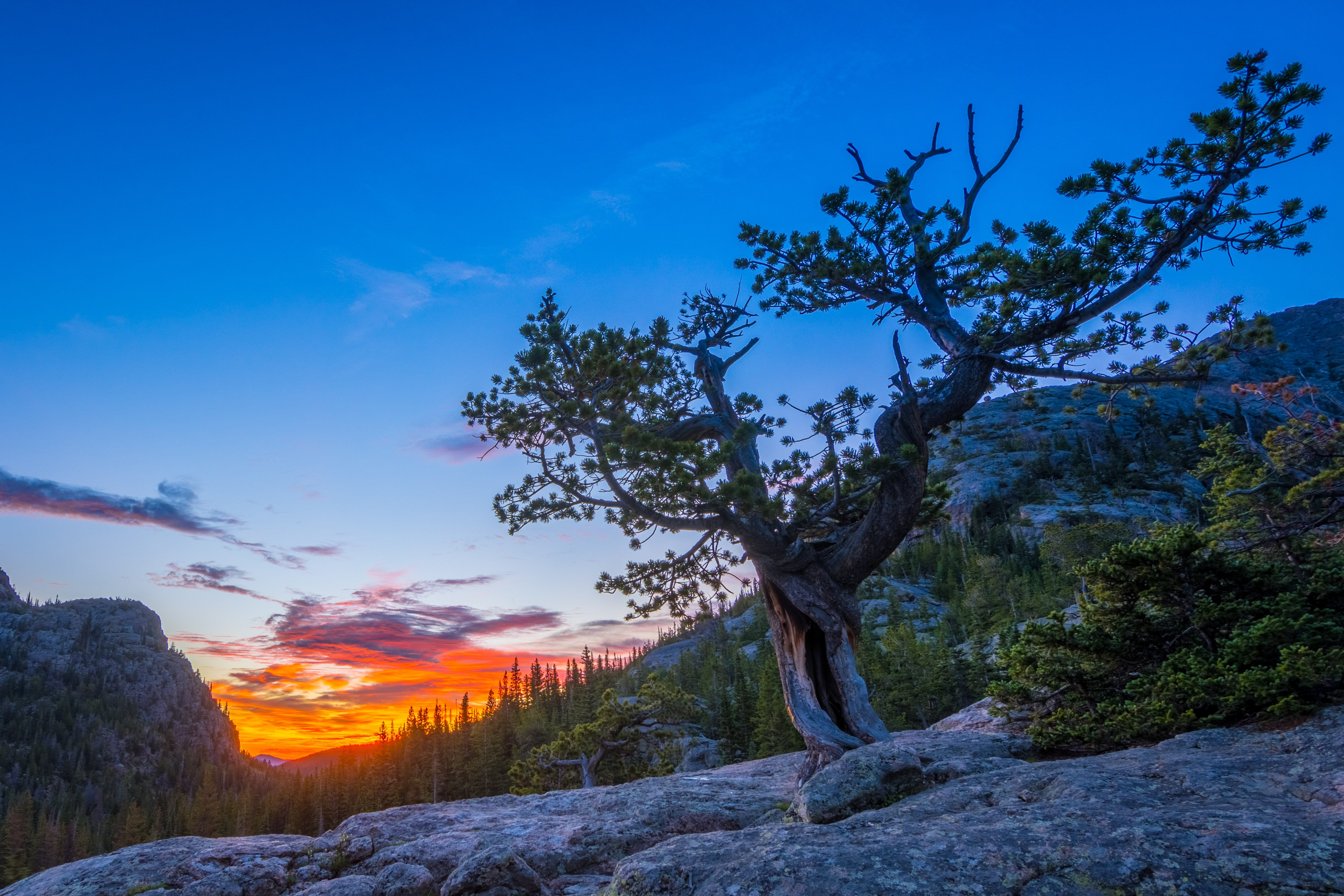 A Cool Looking Tree in Rocky Mountain National Park wallpaper