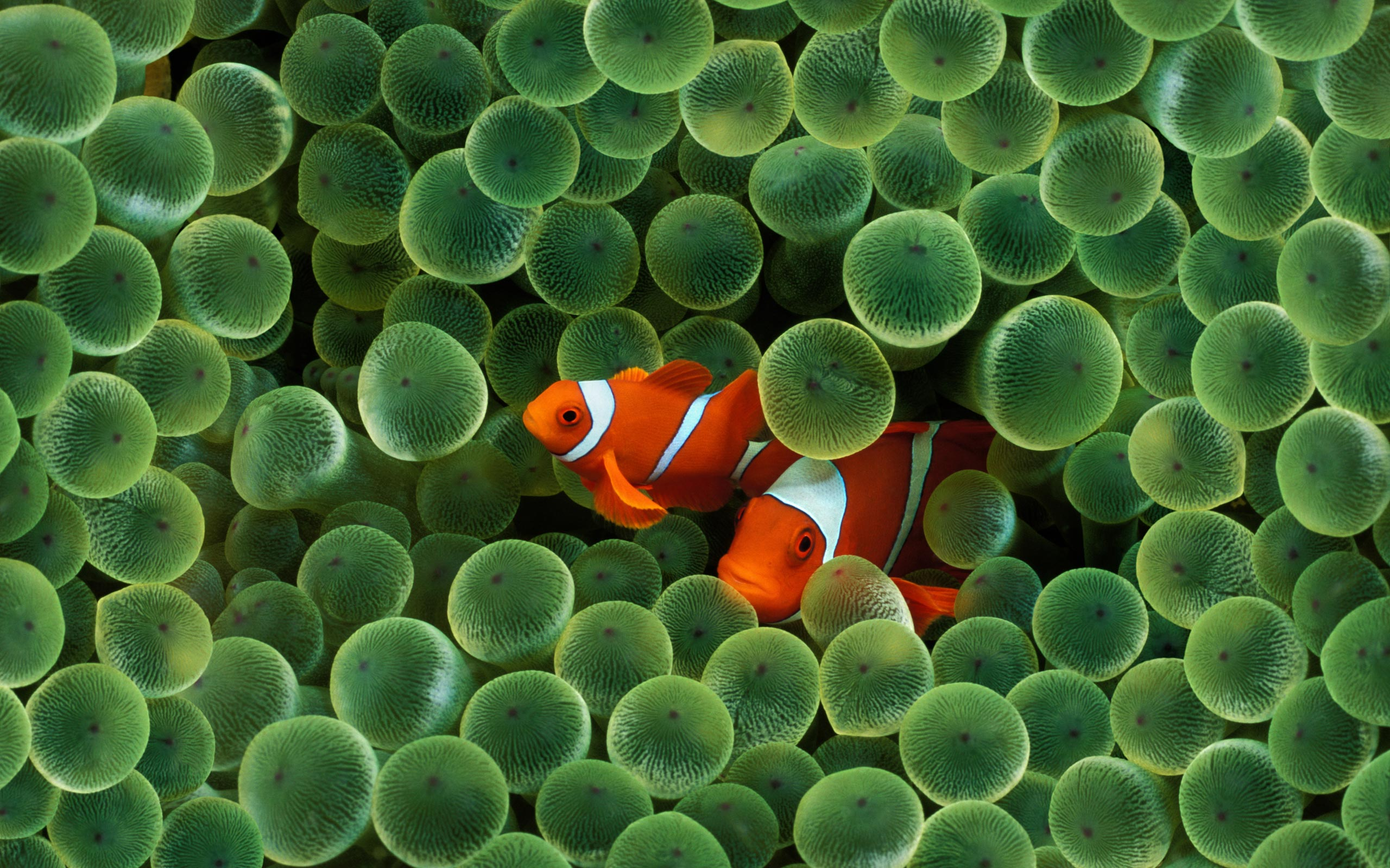 8k Animal Wallpaper Download: Fish Wallpapers, Photos And Desktop Backgrounds Up To 8K