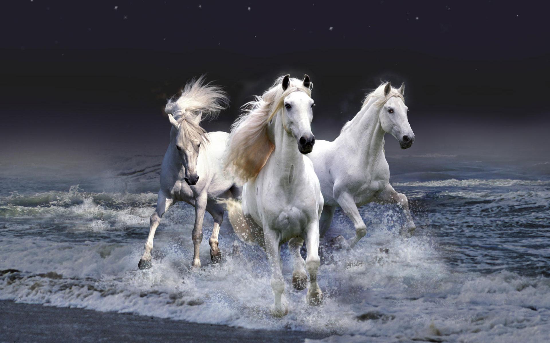Mystic Horses Hd Wallpaper