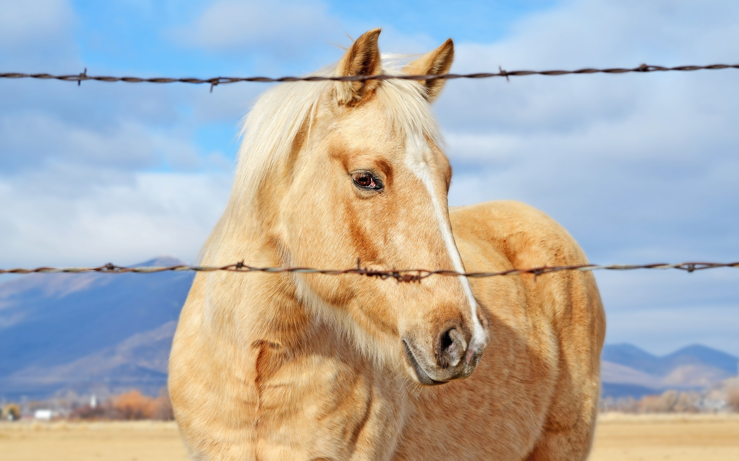 Horse 4k Wallpapers For Your Desktop Or Mobile Screen Free And Easy To Download