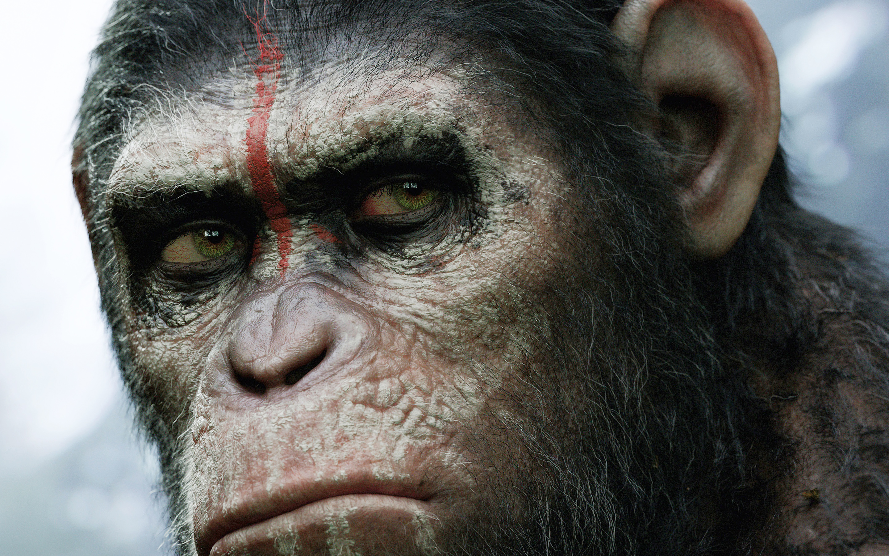 Apes 4k Wallpapers For Your Desktop Or Mobile Screen Free