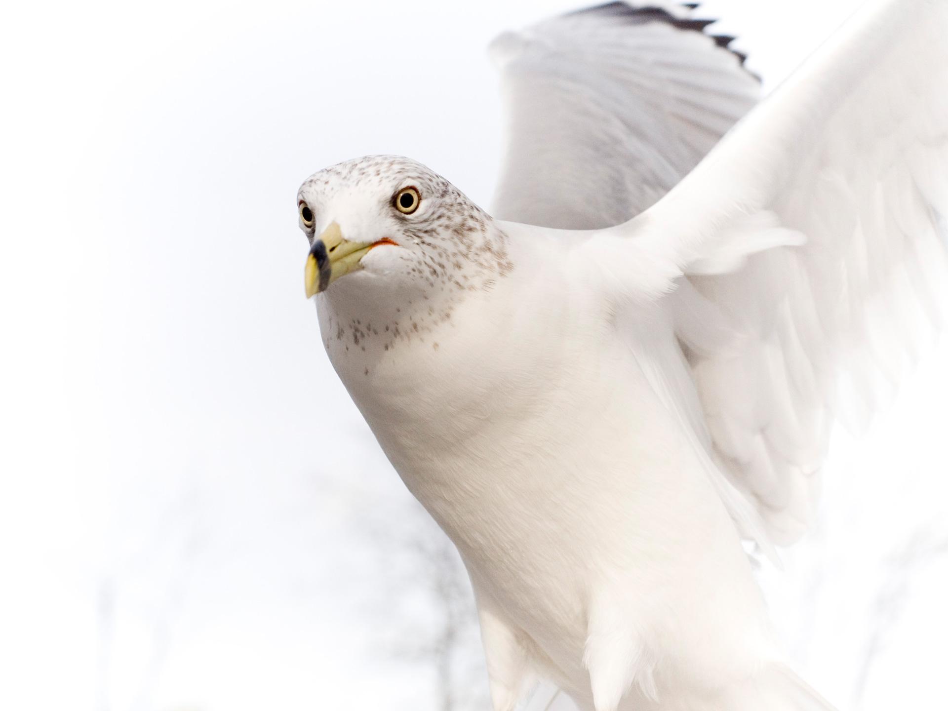 Bird Wallpapers, Photos And Desktop Backgrounds Up To 8K