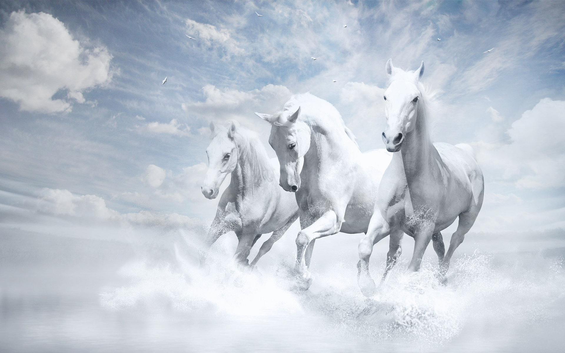 White Beautiful Wallpaper Laptop Horse