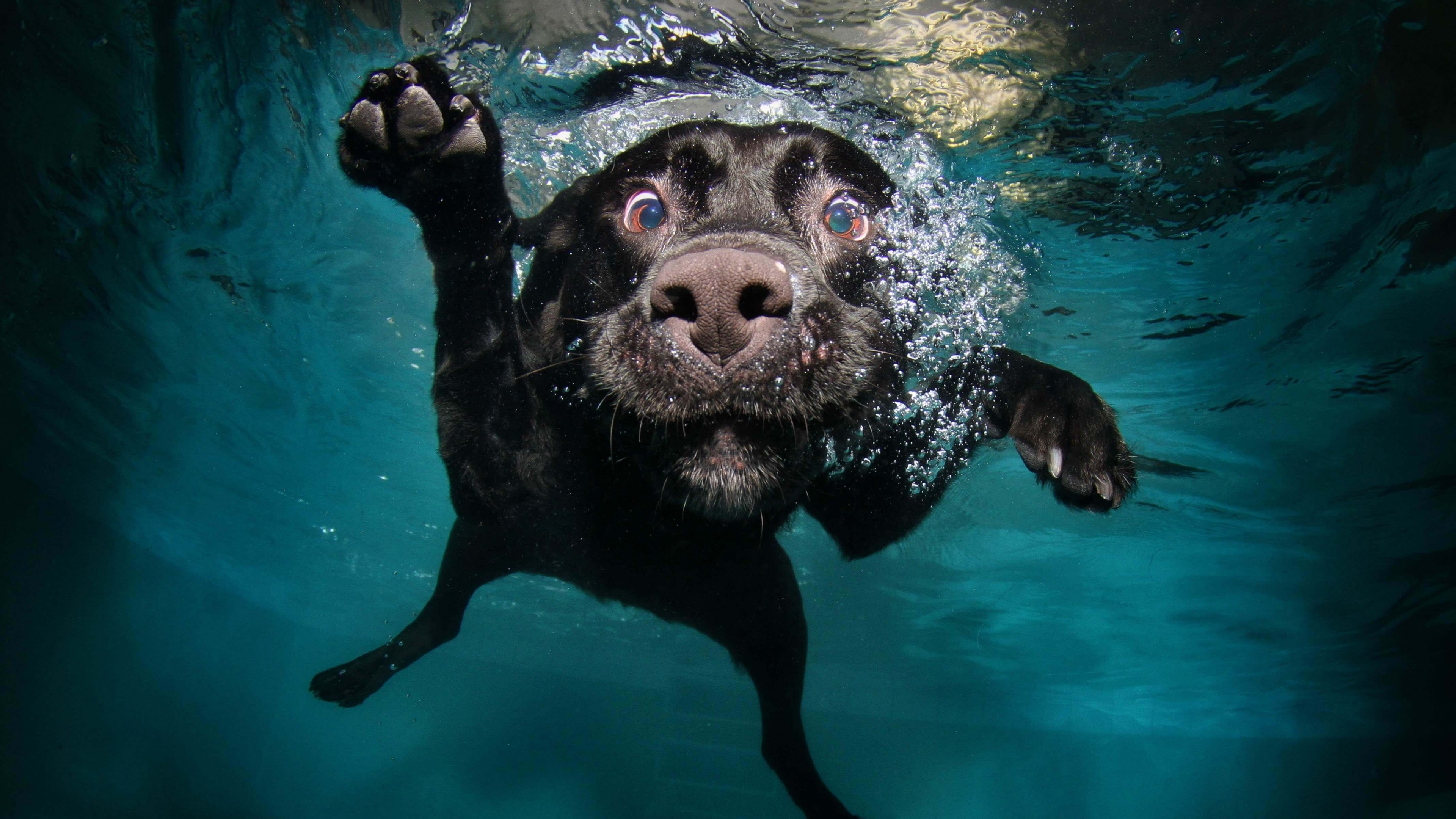 underwater dog wallpaper