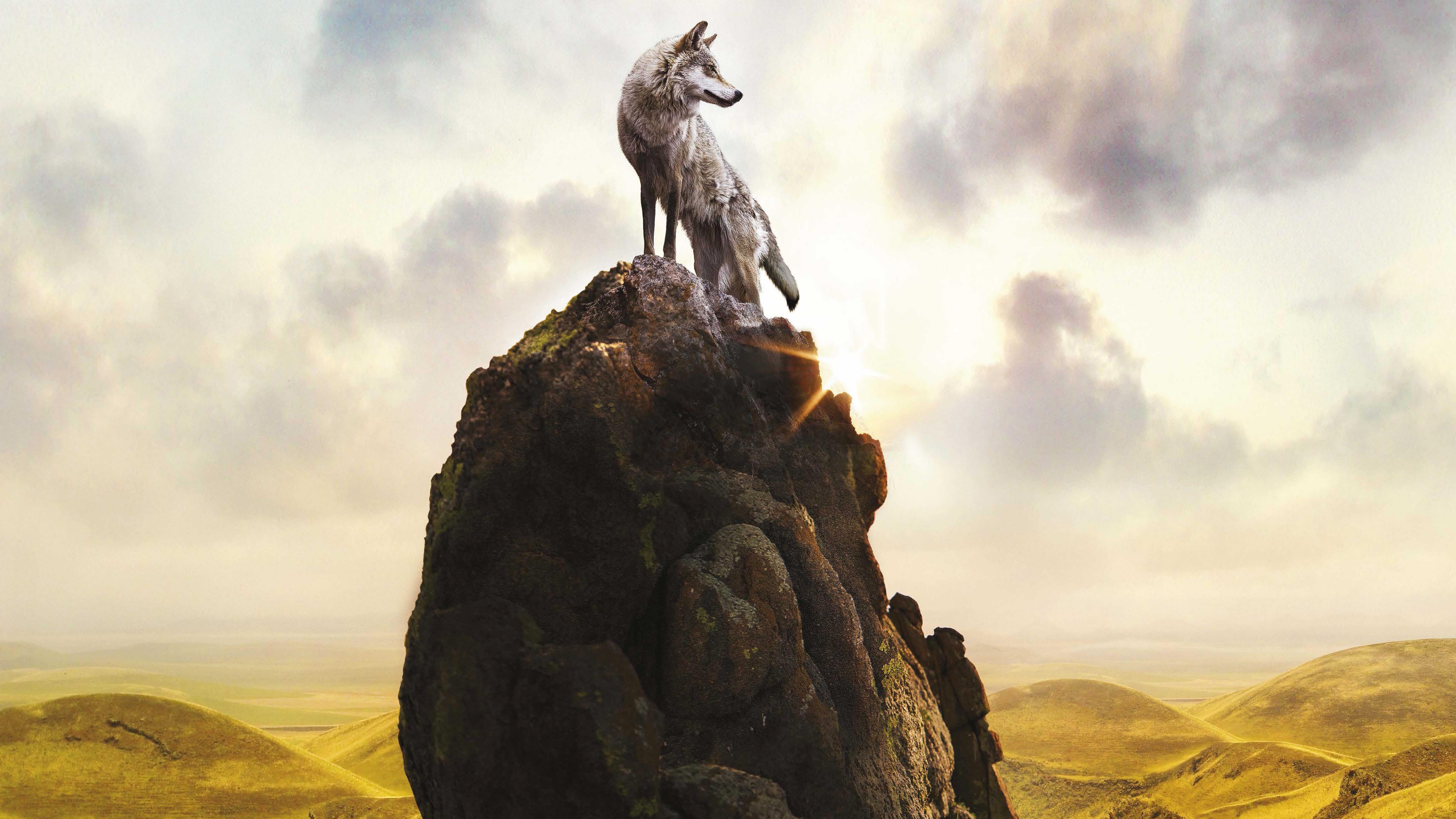Wolf wallpapers photos and desktop backgrounds up to 8k - 8k desktop backgrounds ...