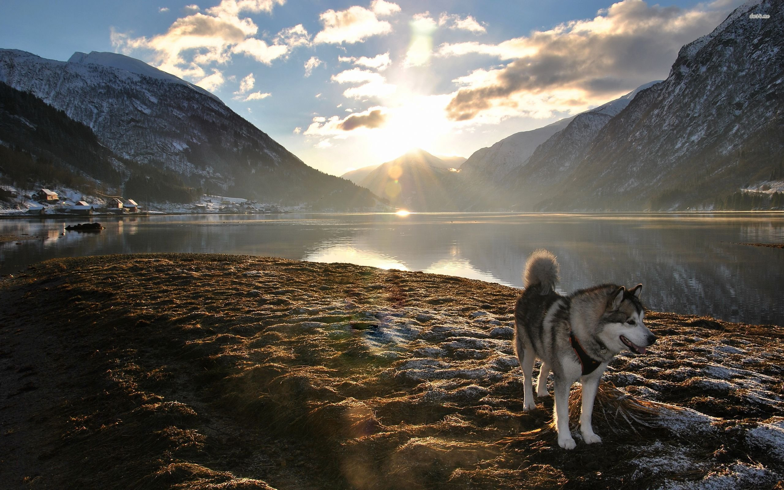 Husky 4k Wallpapers For Your Desktop Or Mobile Screen Free And Easy To Download