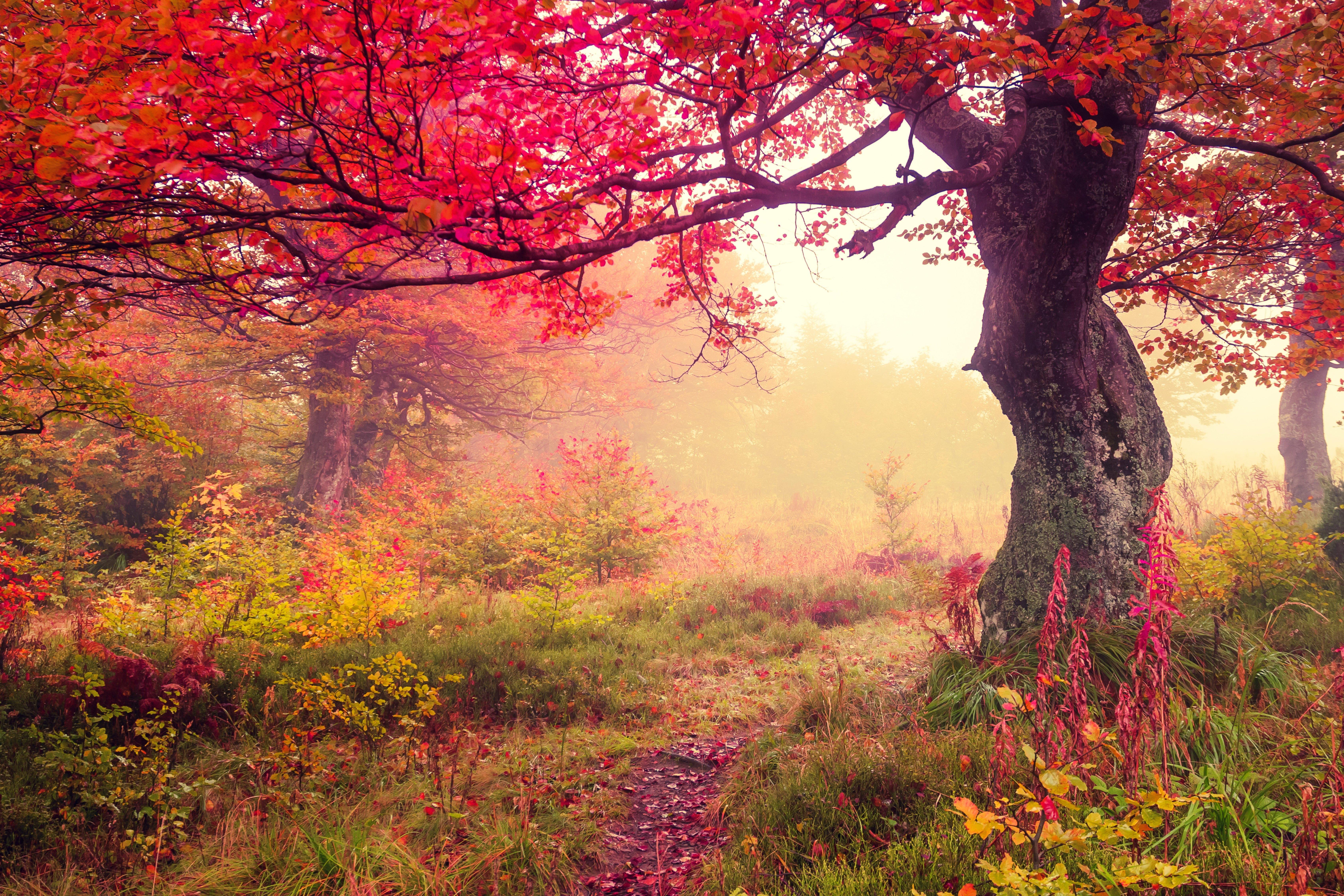 wallpaper landscape winter autumn - photo #42