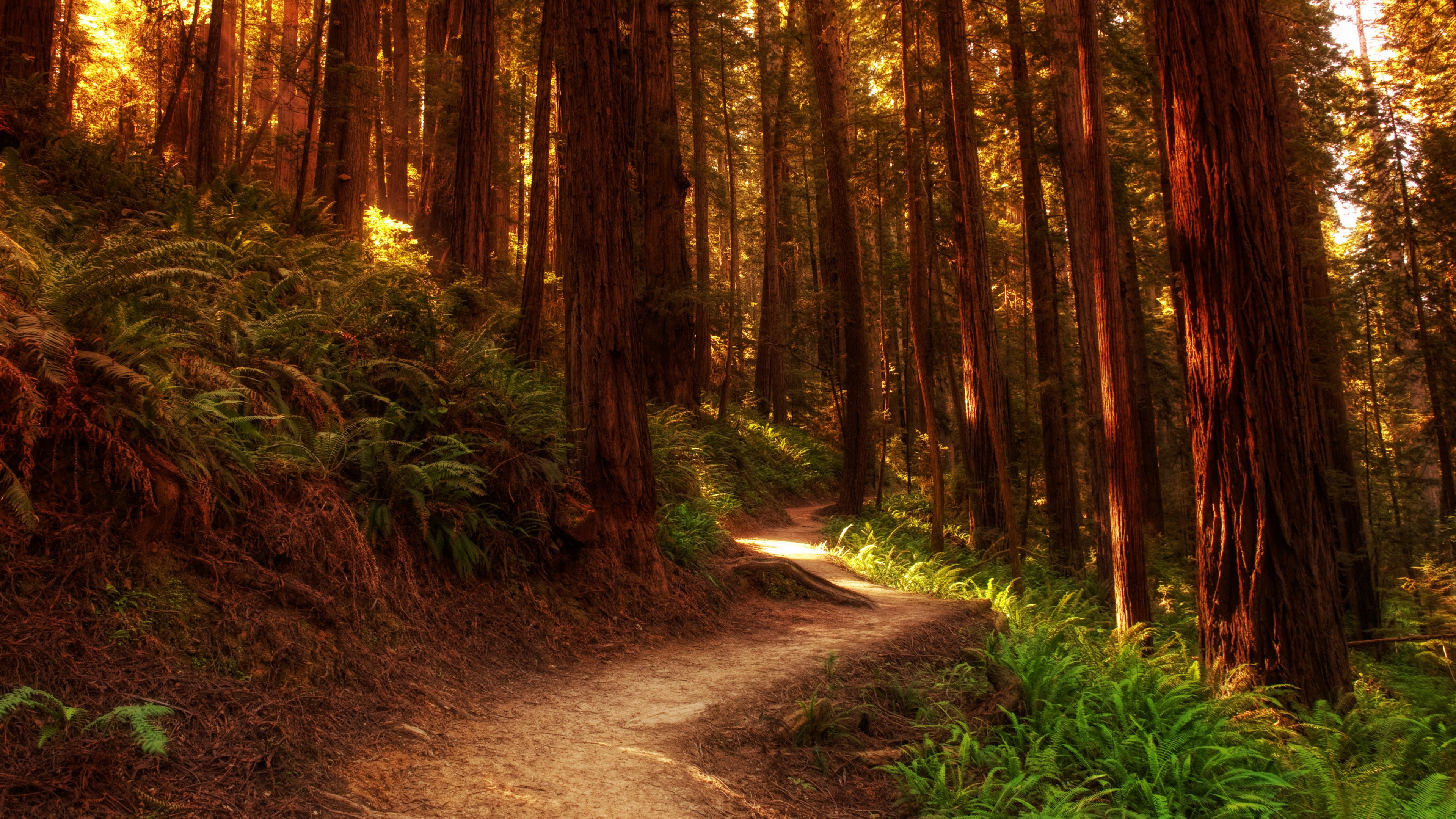 Forest Wallpapers Photos And Desktop Backgrounds Up To 8k
