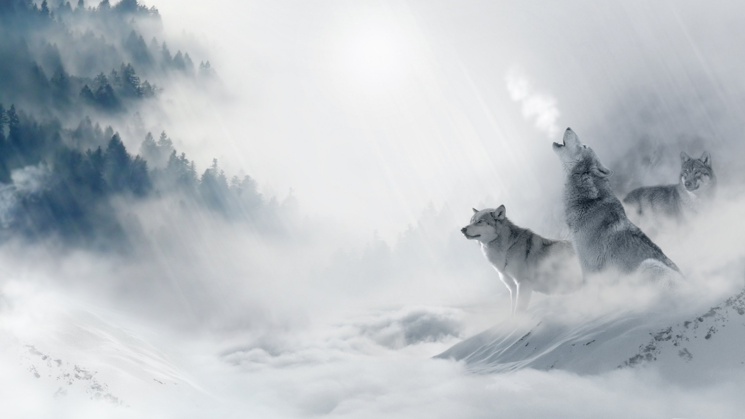Wolf wallpapers photos and desktop backgrounds up to 8k - Wolf howling hd ...