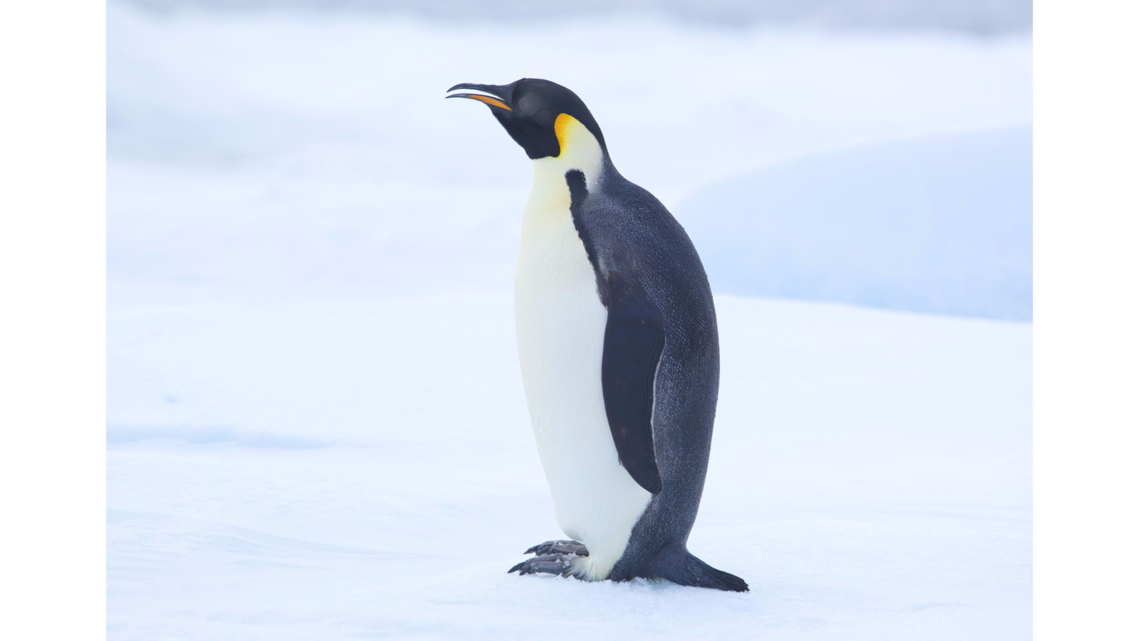 penguin wallpapers photos and desktop backgrounds up to