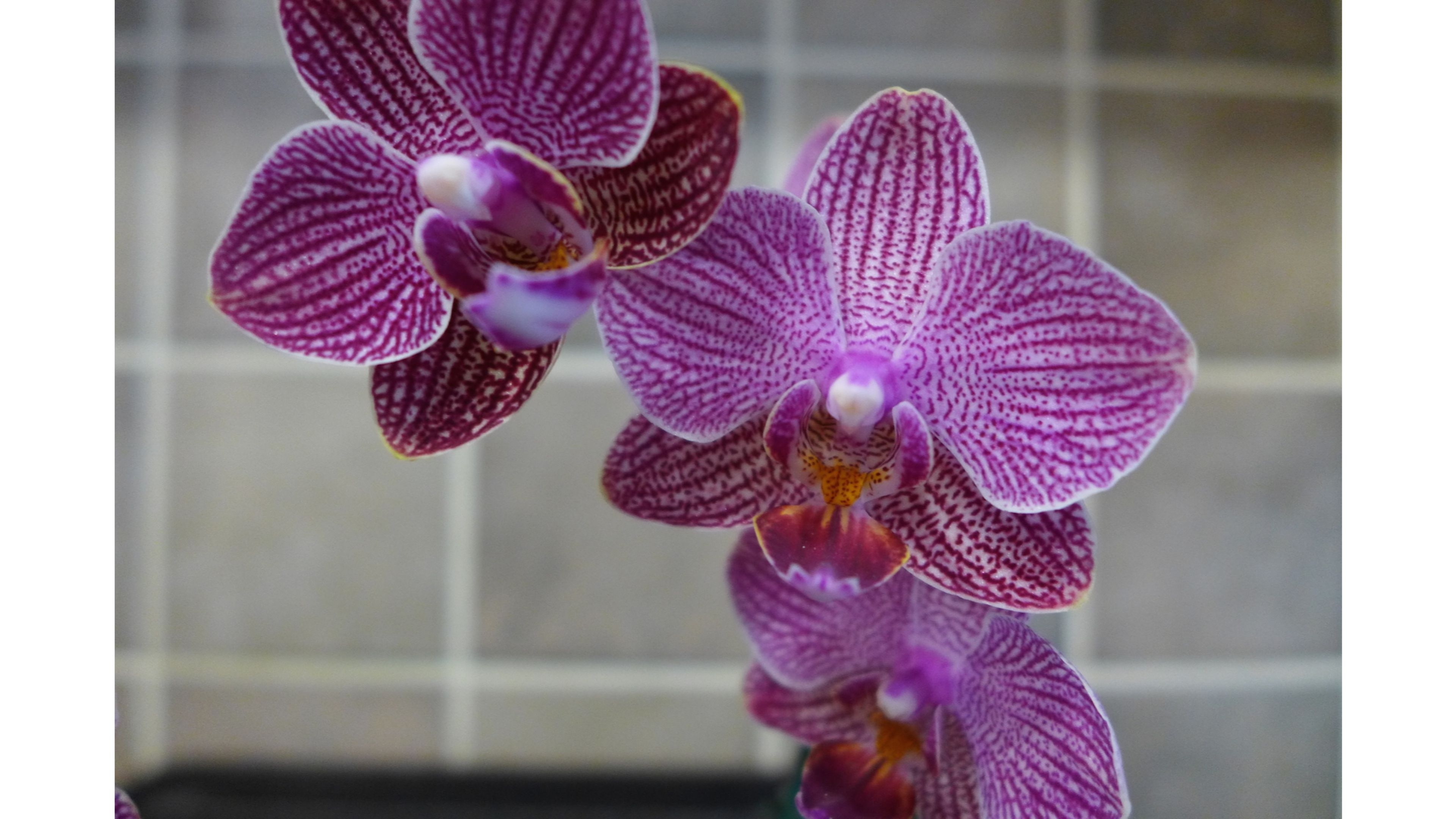 Wild Purple Orchids S wallpaper