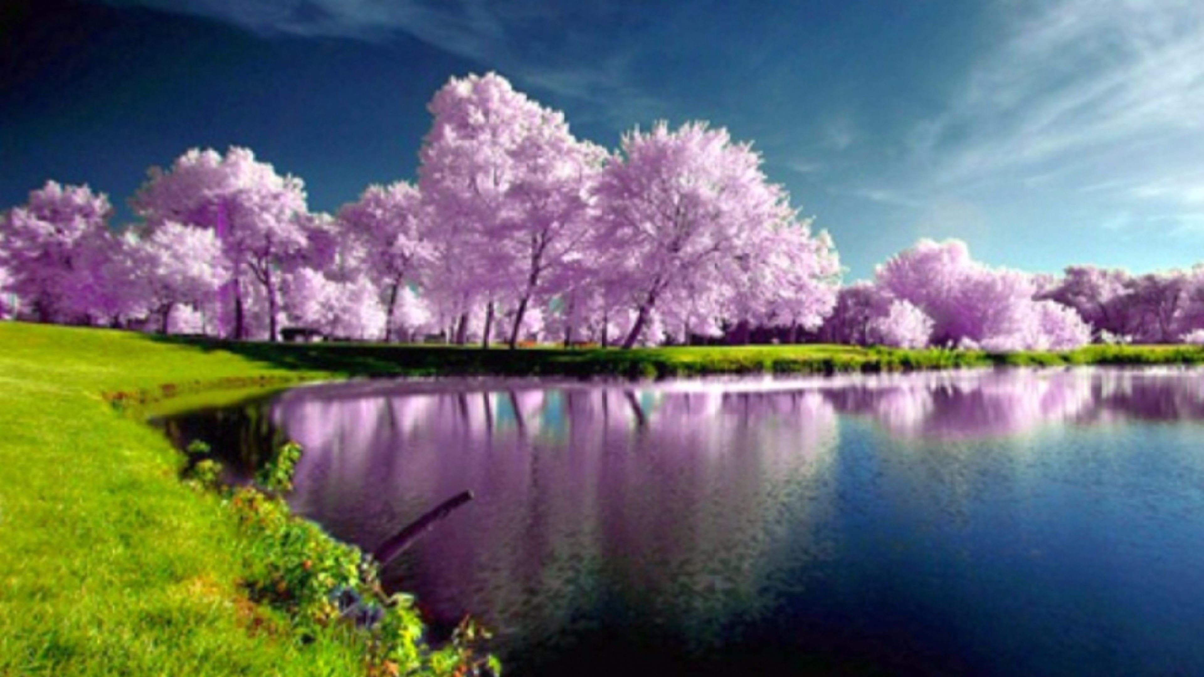 Purple Trees Nature wallpaper