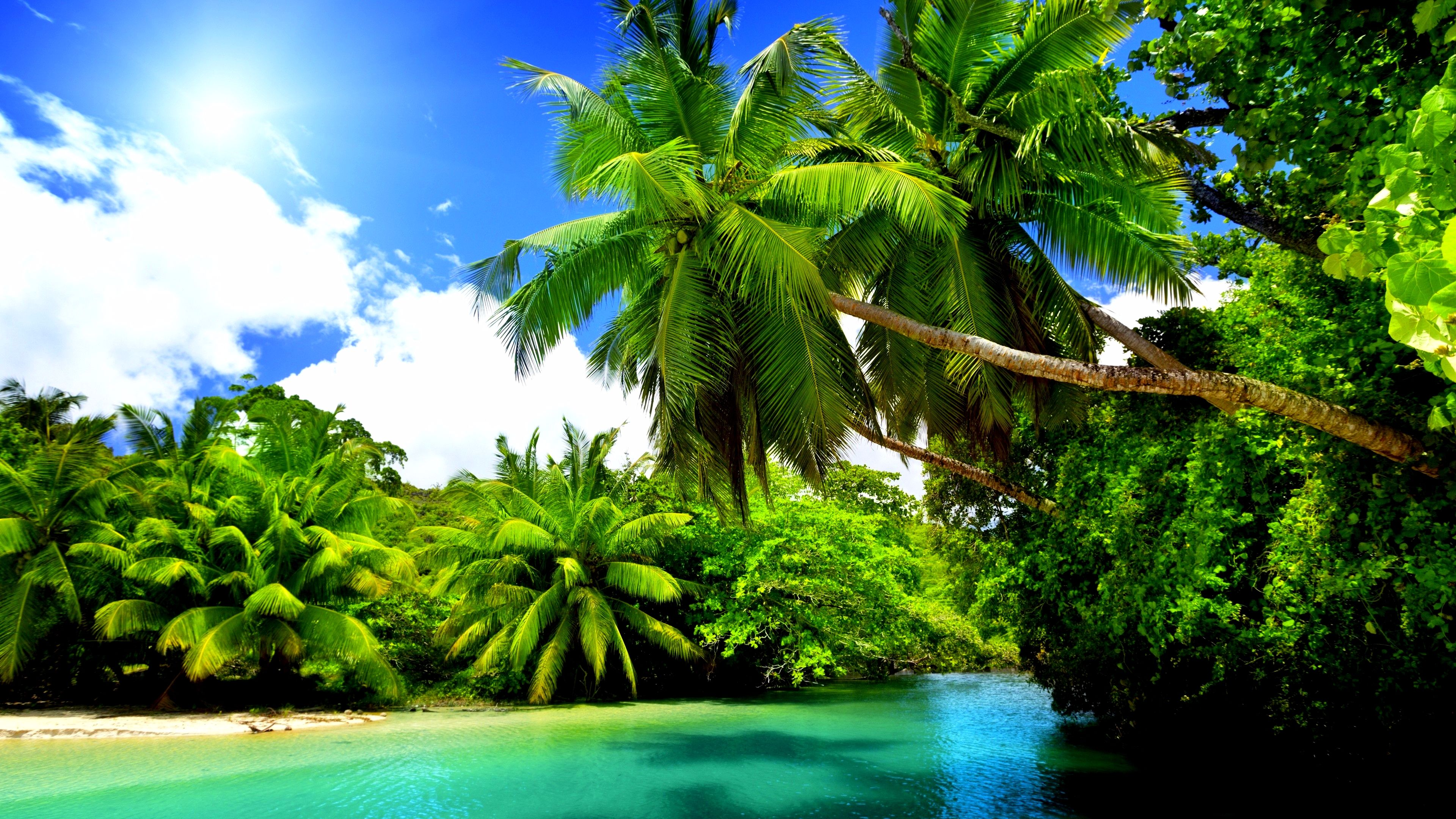 Tropical nature 4k wallpaper for Photo la nature gratuit