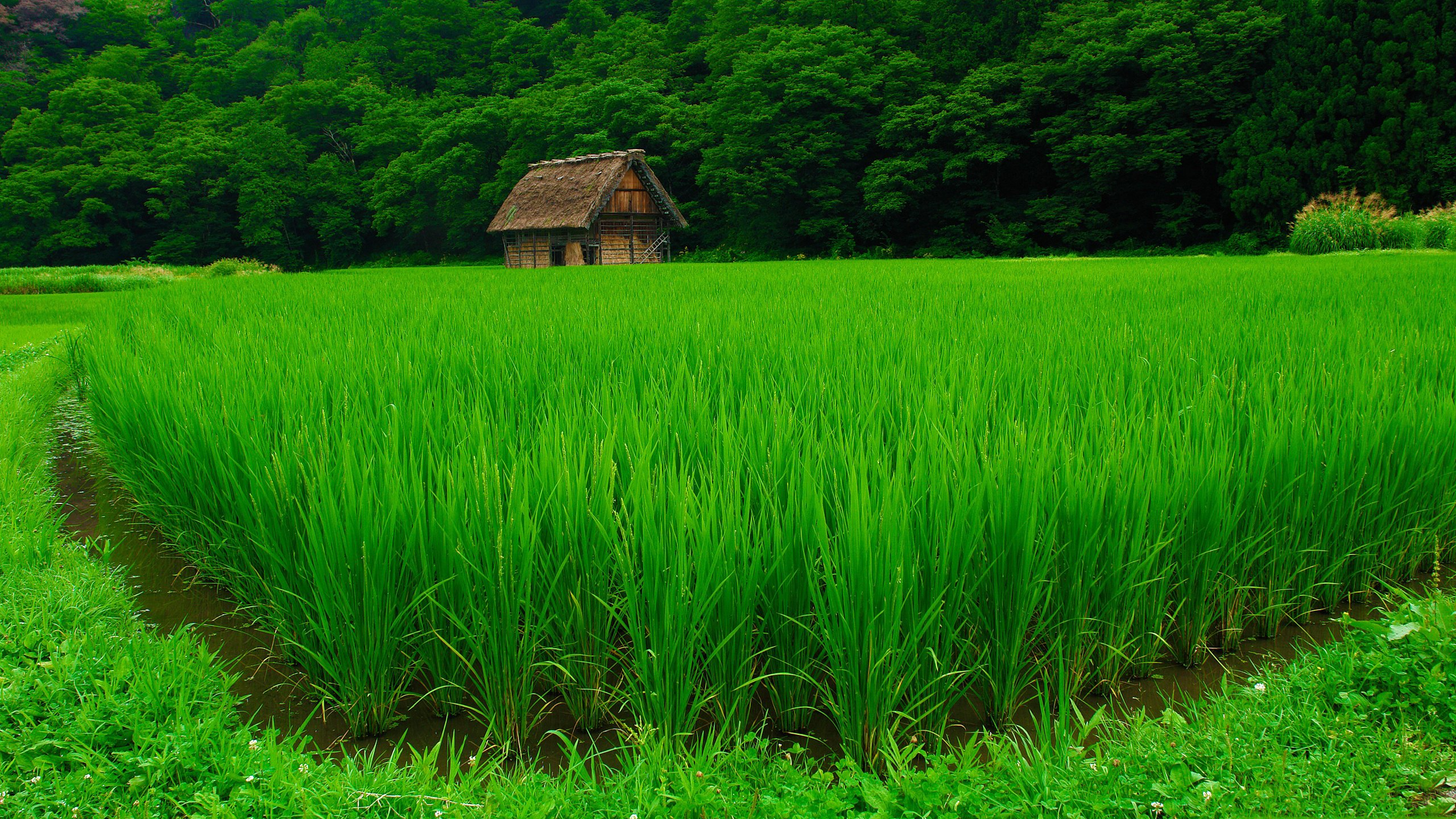 Beautiful View Of Farm House With Greenery wallpaper