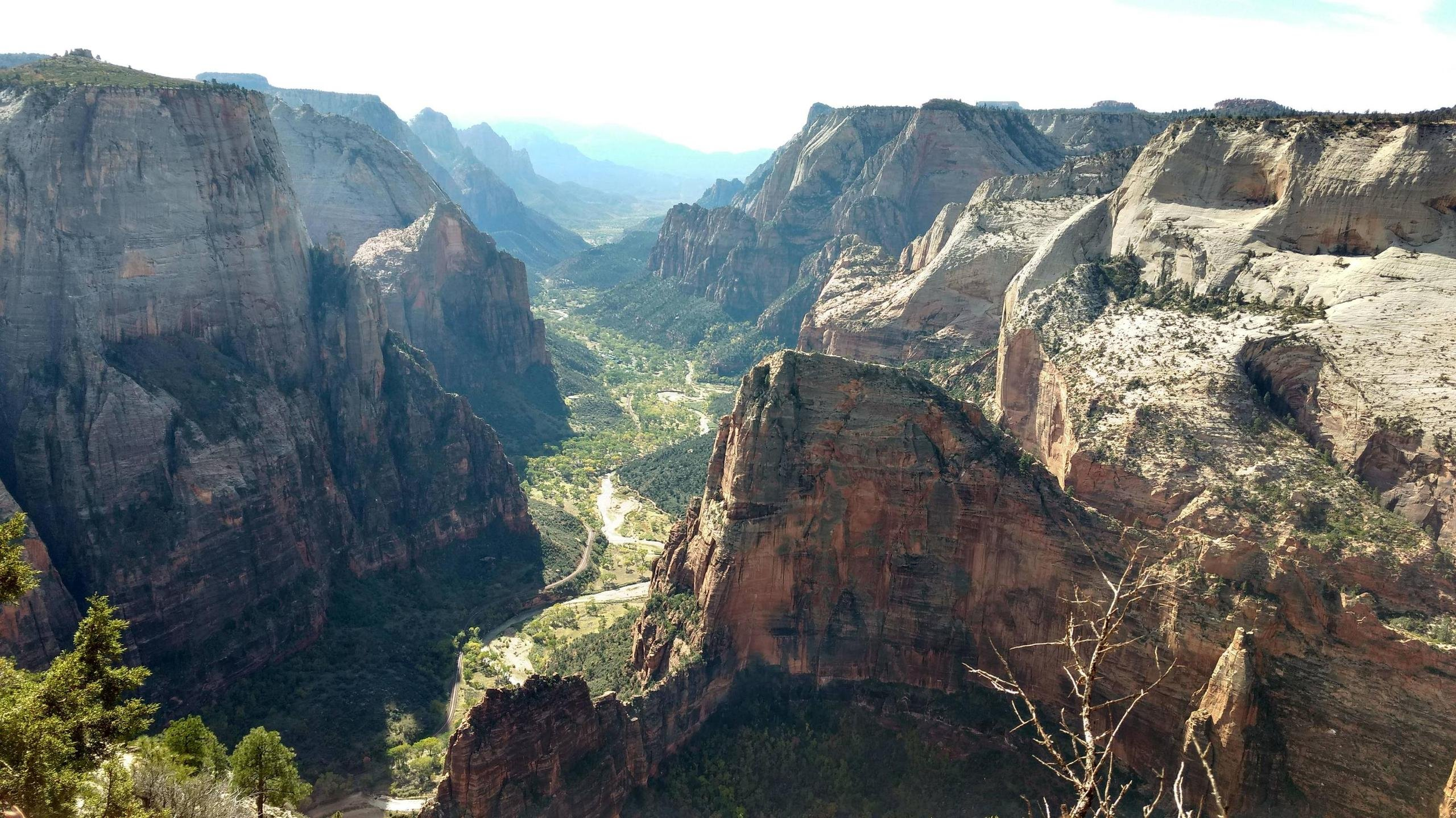 Observation Point Zion National Park wallpaper