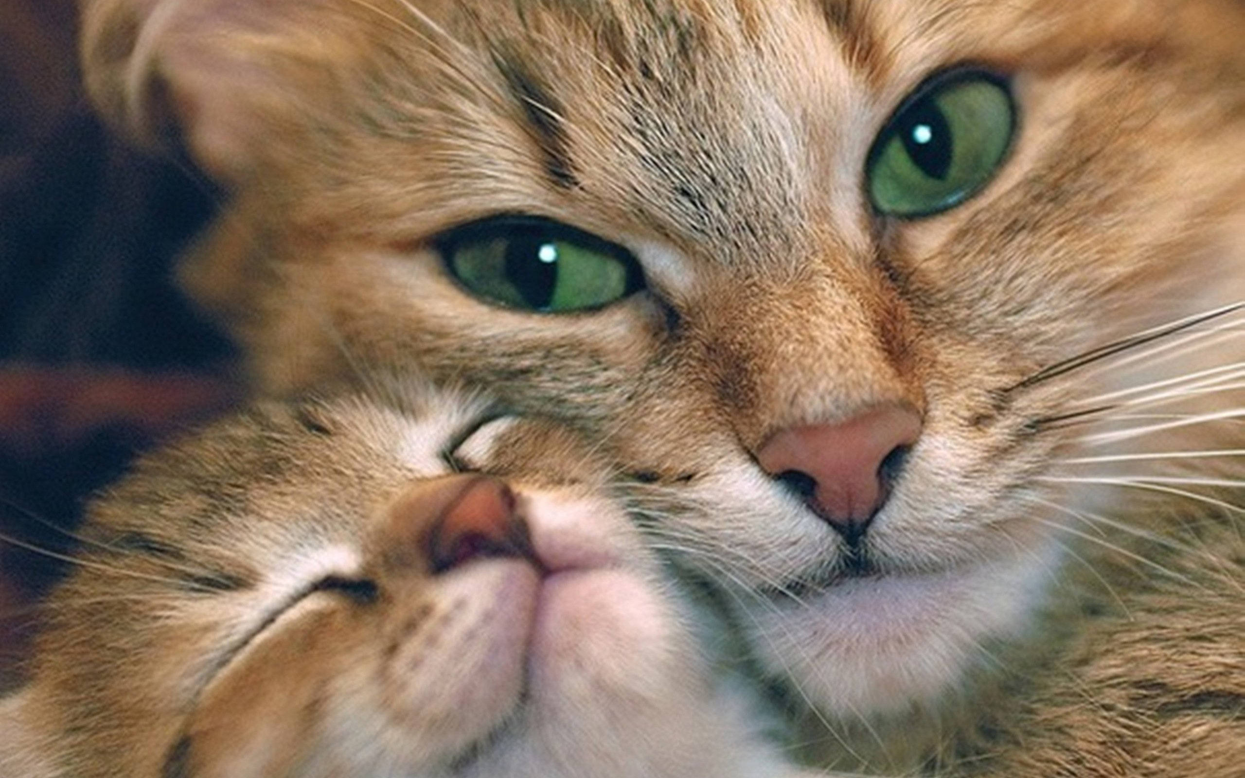 Cute Cat And Kitten Hd Wallpaper