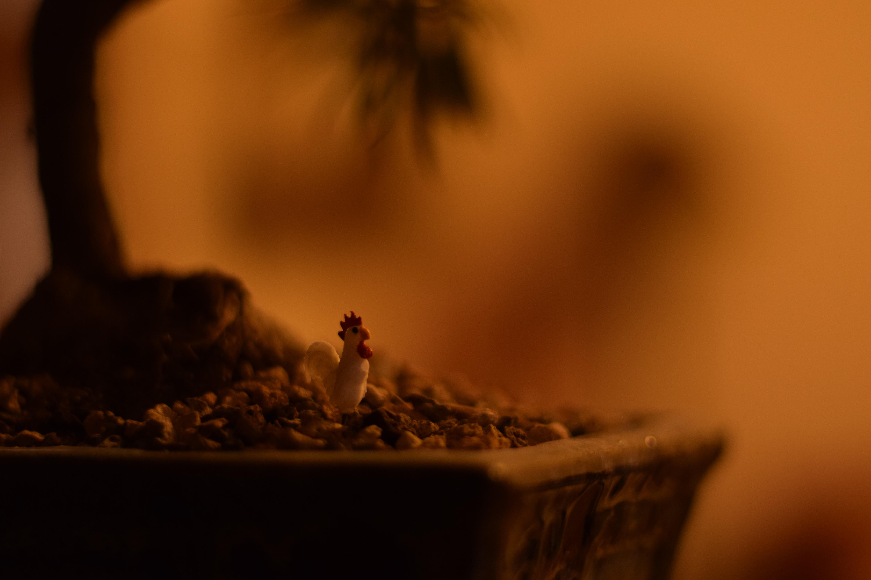 bonsai wallpaper 03 ndash - photo #41