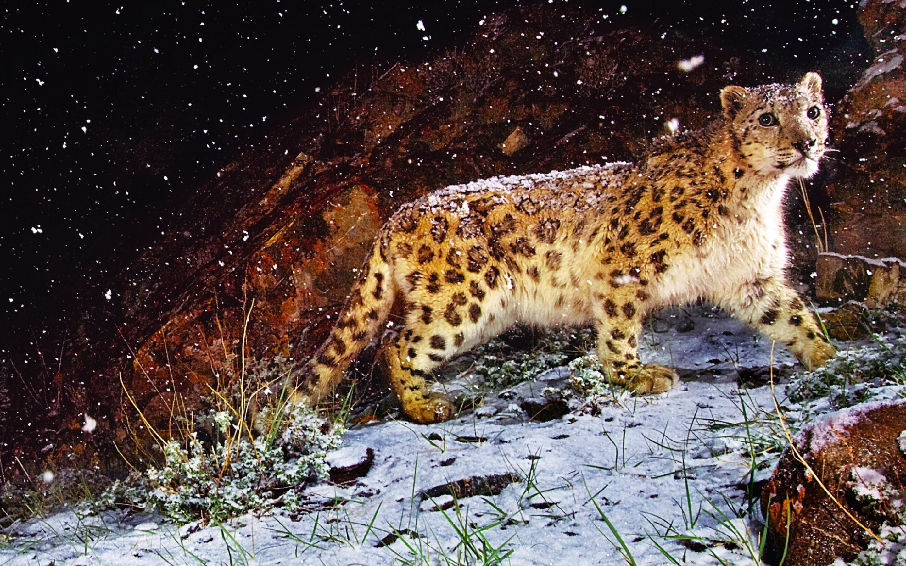 leopard wallpapers photos and desktop backgrounds up to 8K
