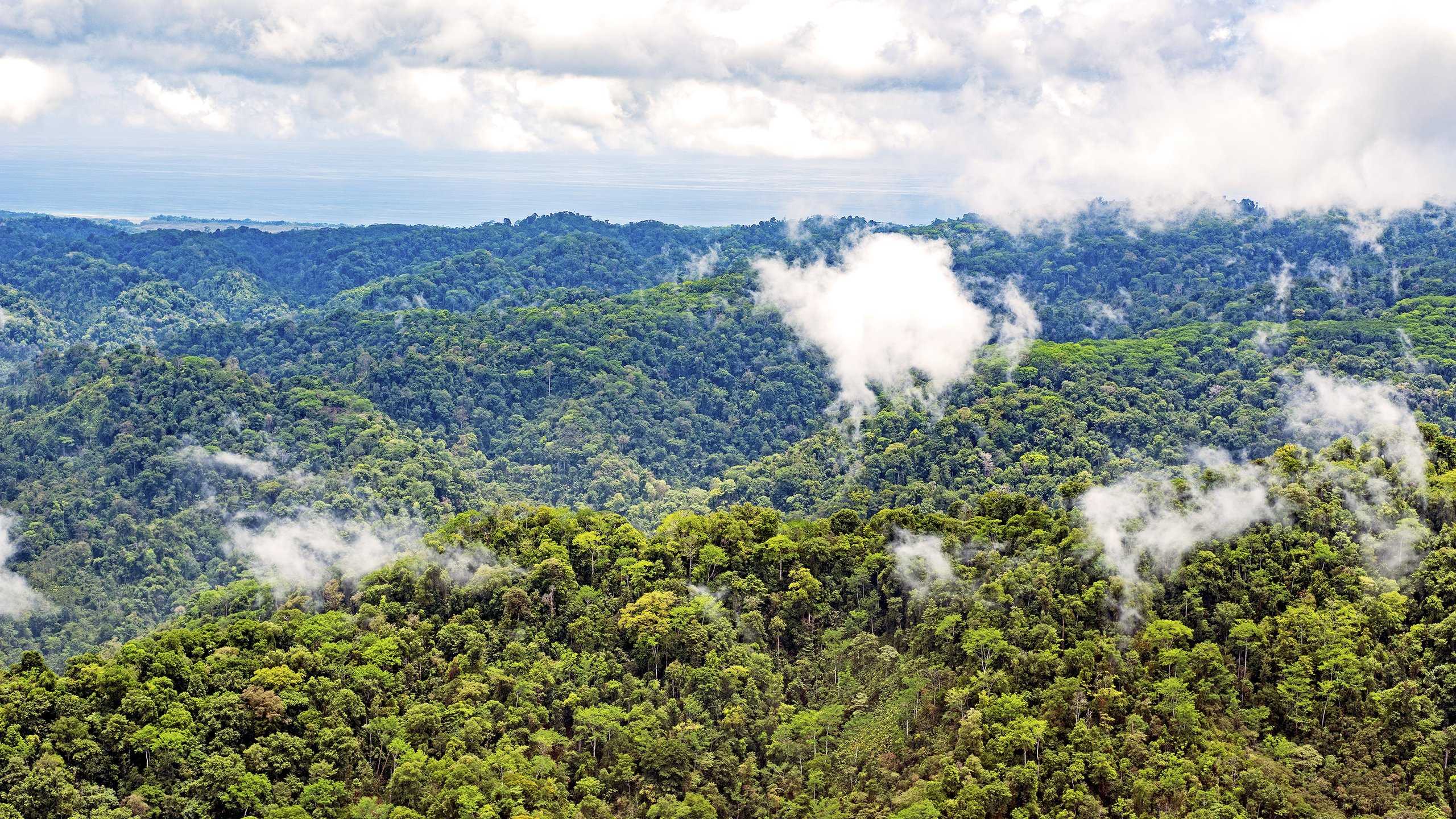 Corcavado National Park Costa Rica wallpaper