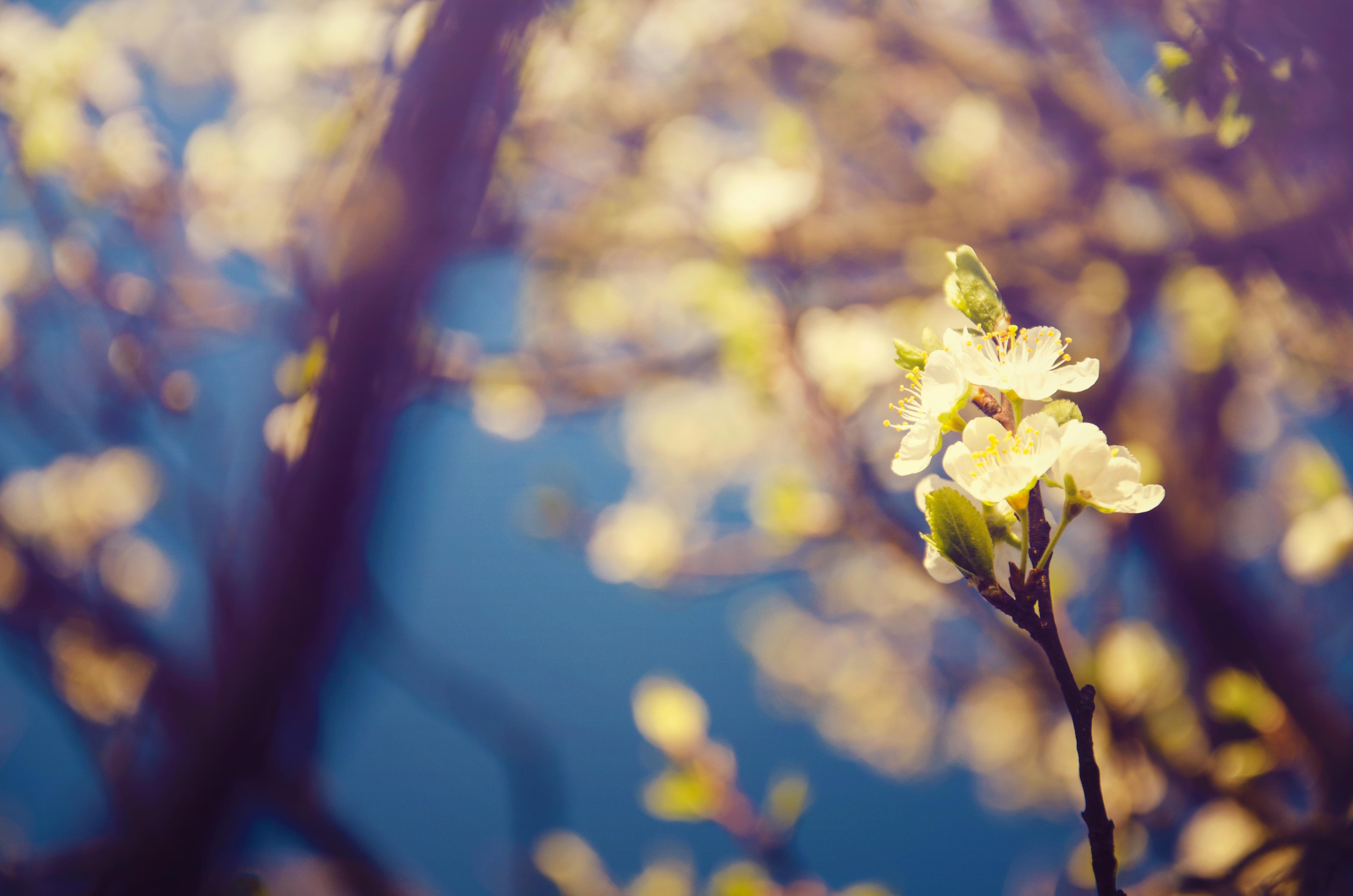 Wonderful Nature - Flowers of Spring wallpaper