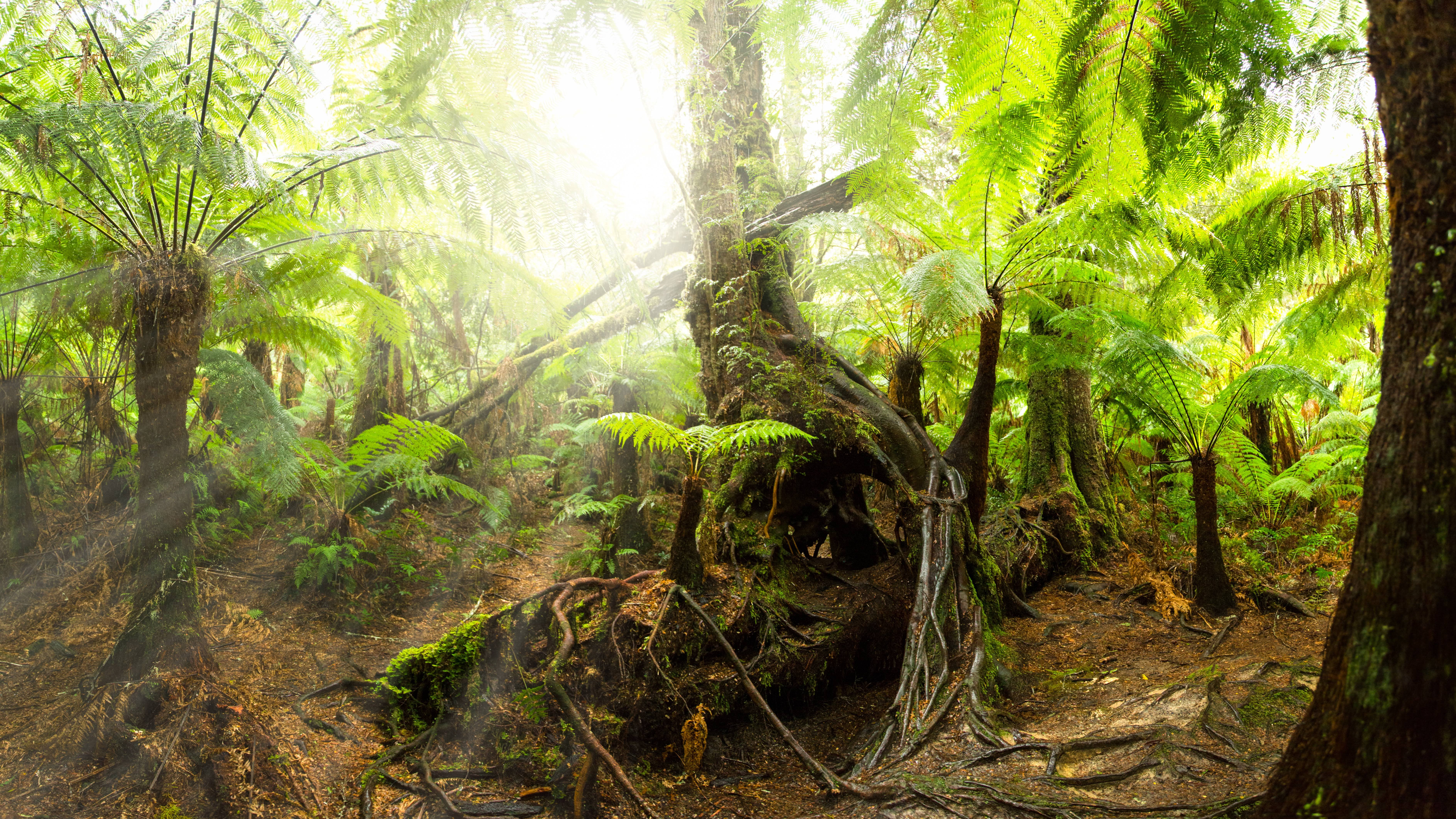 Rainforest 4k Wallpapers For Your Desktop Or Mobile Screen