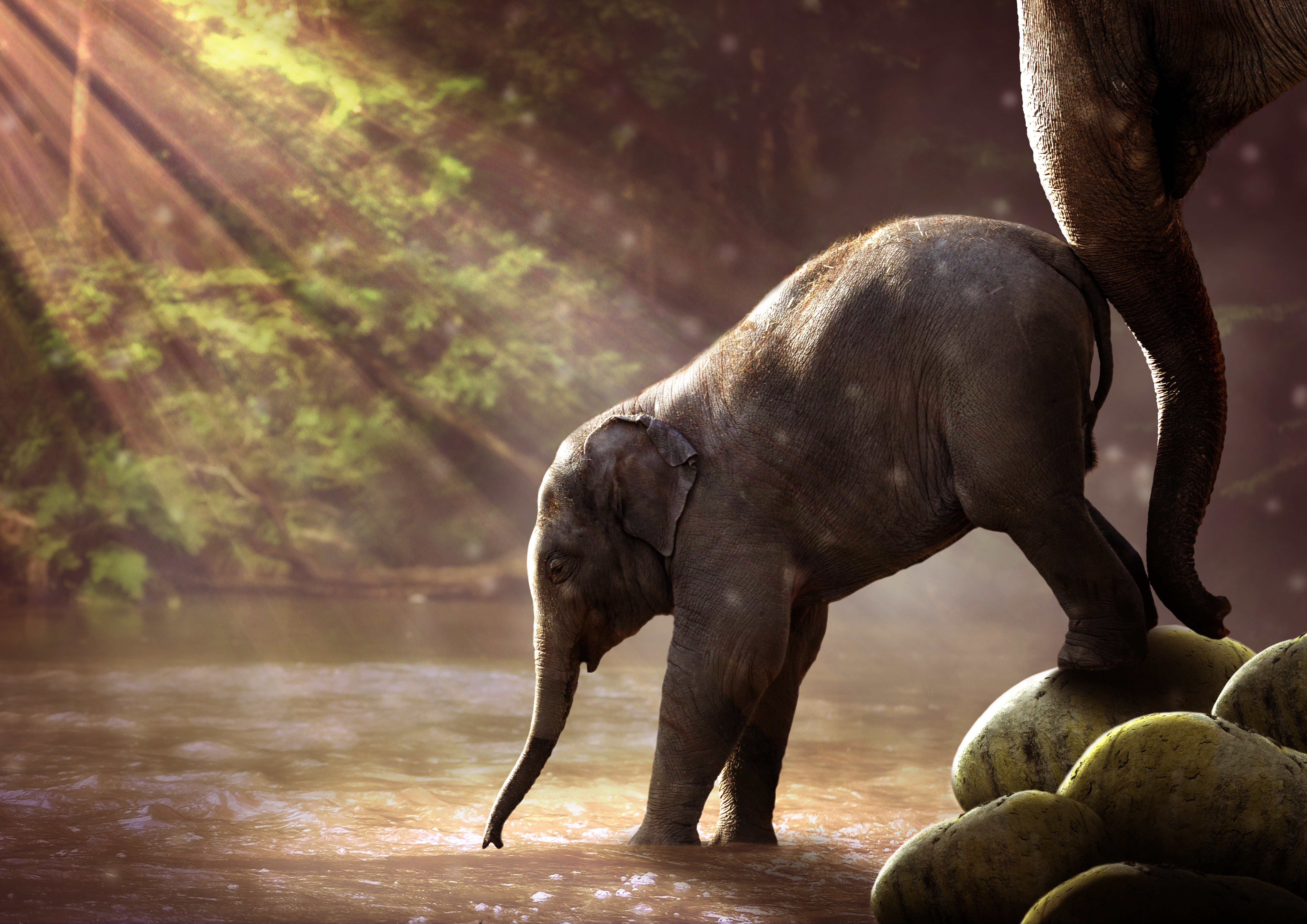 Baby Elephant Drinking Water wallpaper