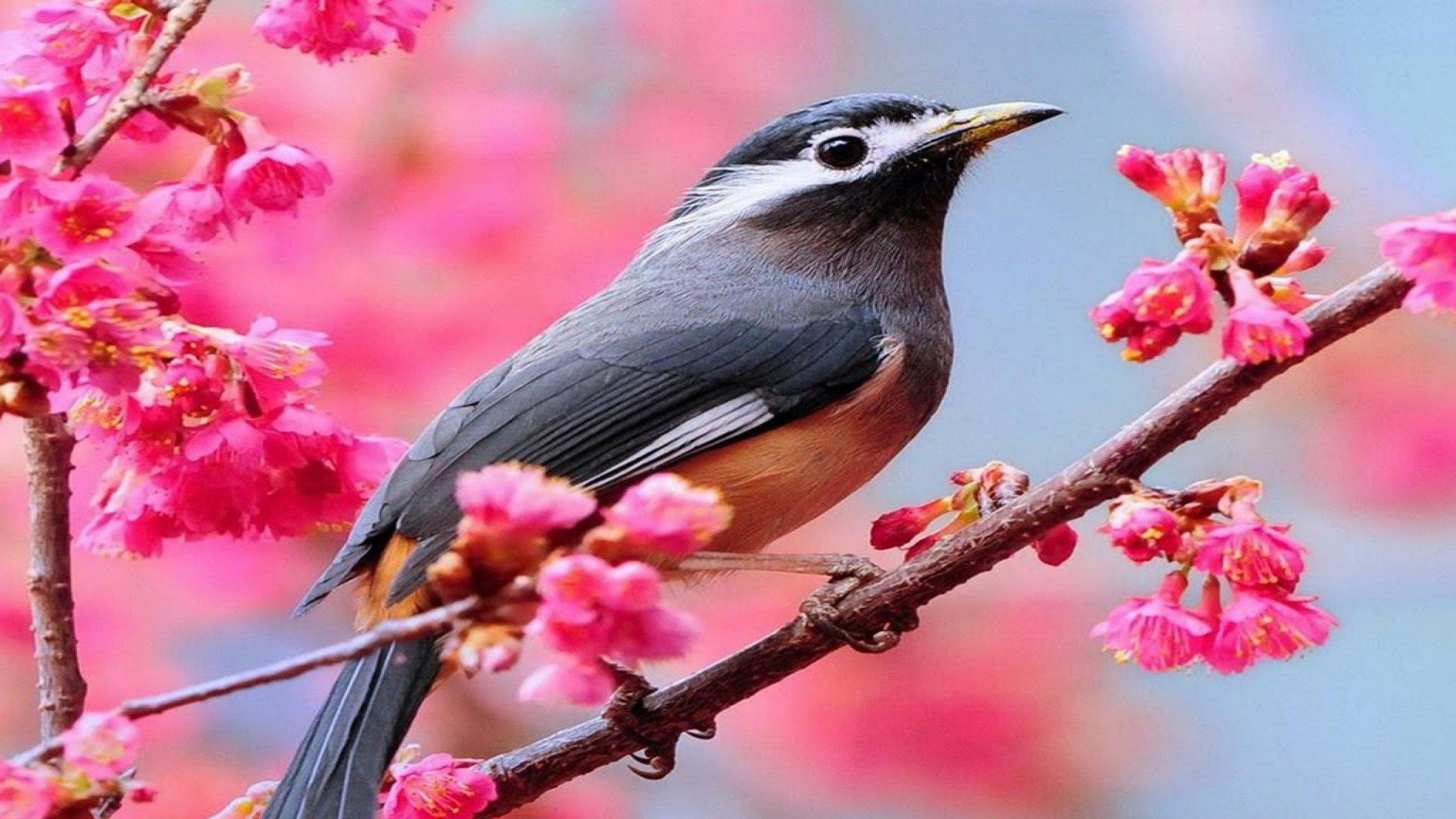 Bird Wallpapers Photos And Desktop Backgrounds Up To 8K 7680x4320