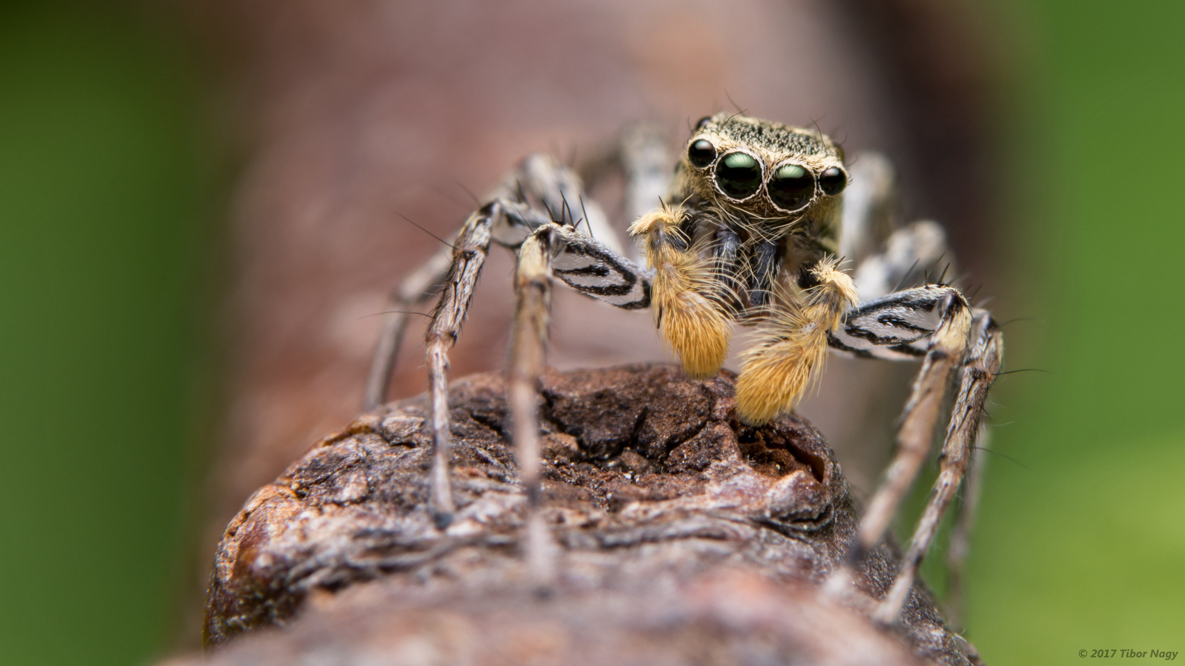 spider wallpapers, photos and desktop backgrounds up to 8k