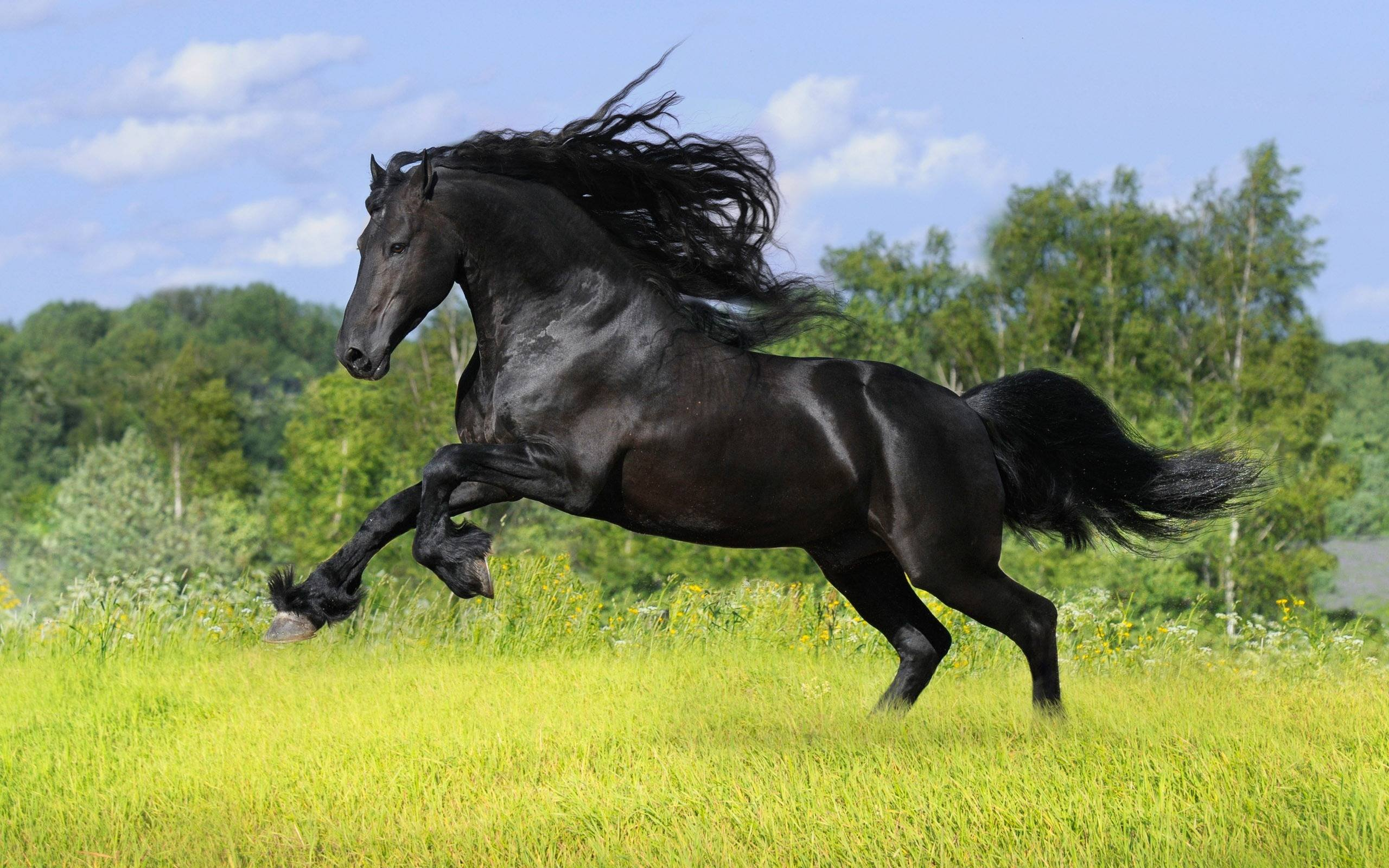 Running Black Horse Hd Wallpaper