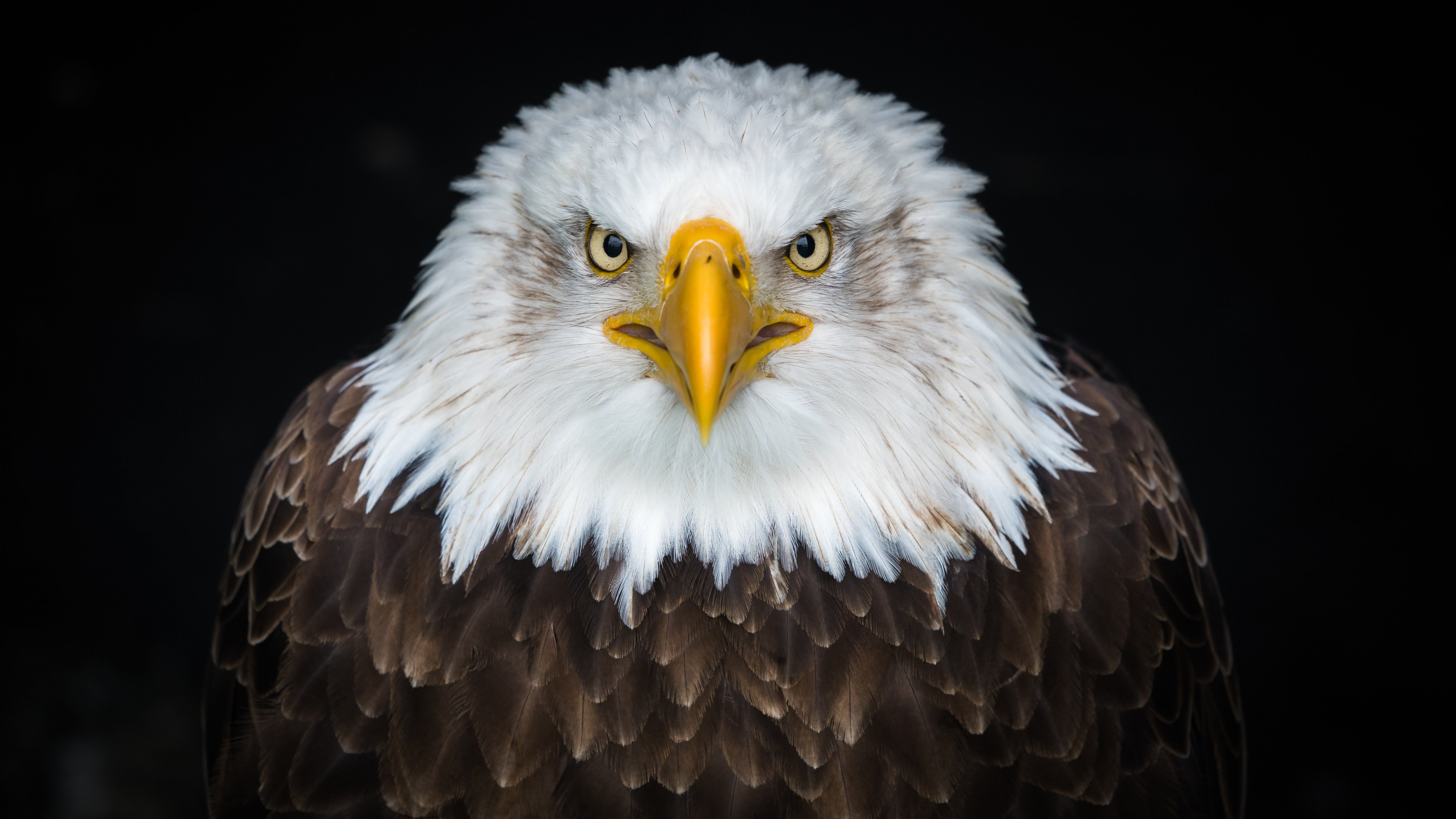 Eagle 4k Wallpapers For Your Desktop Or Mobile Screen Free