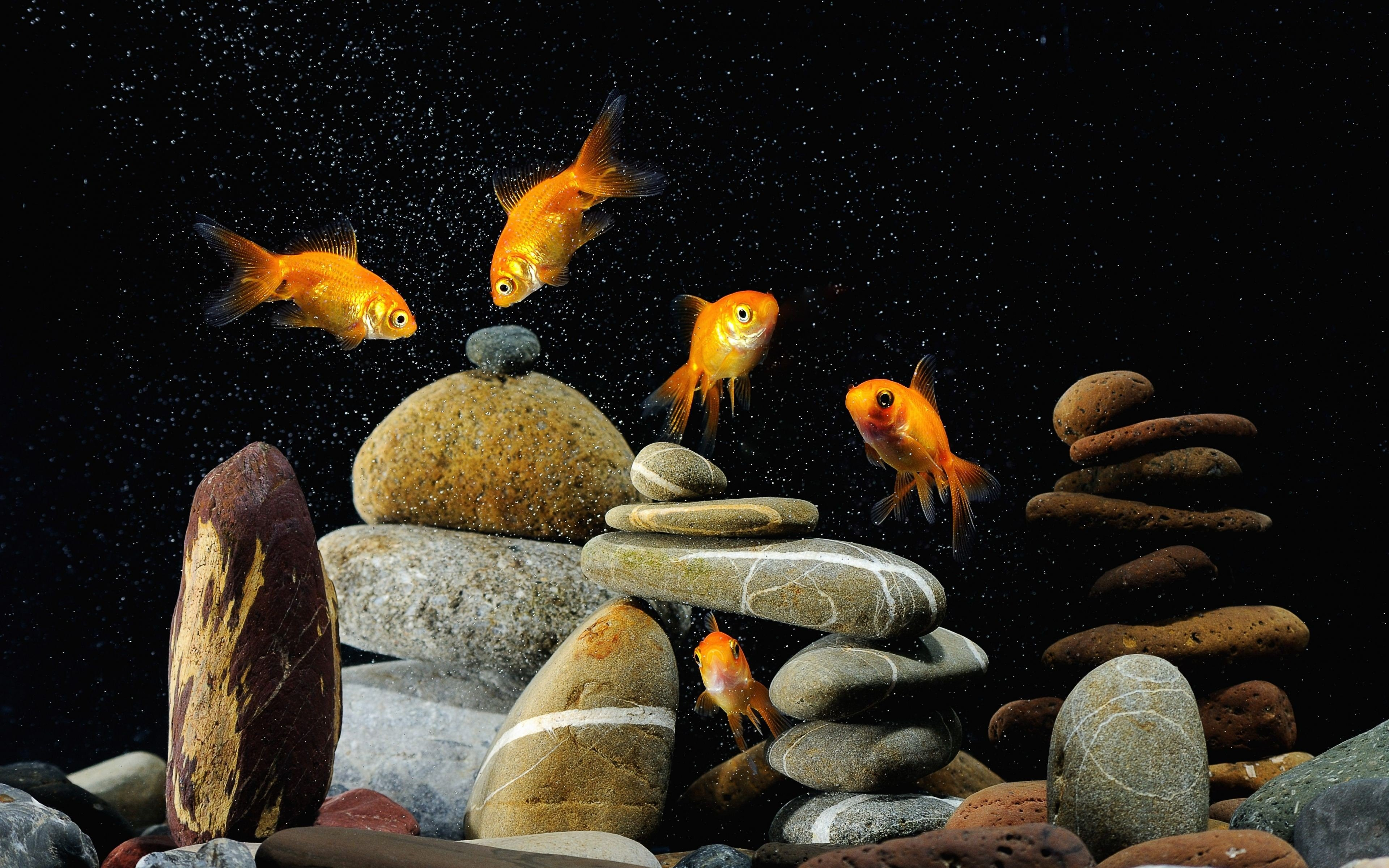 Aquarium wallpapers photos and desktop backgrounds up to 8k aquarium 11 wallpaper voltagebd Images