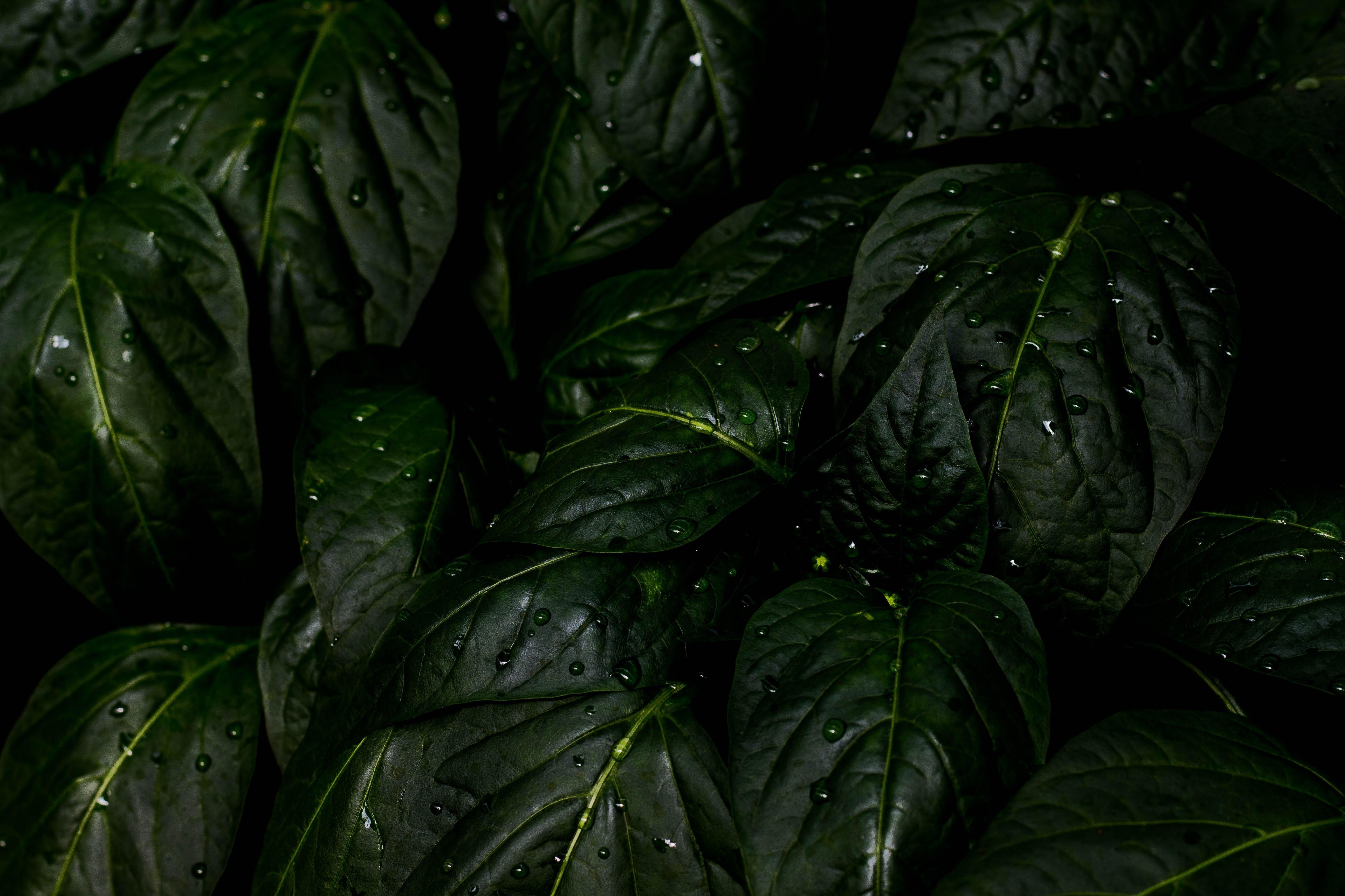 Rain Wallpapers, Photos And Desktop Backgrounds Up To 8K