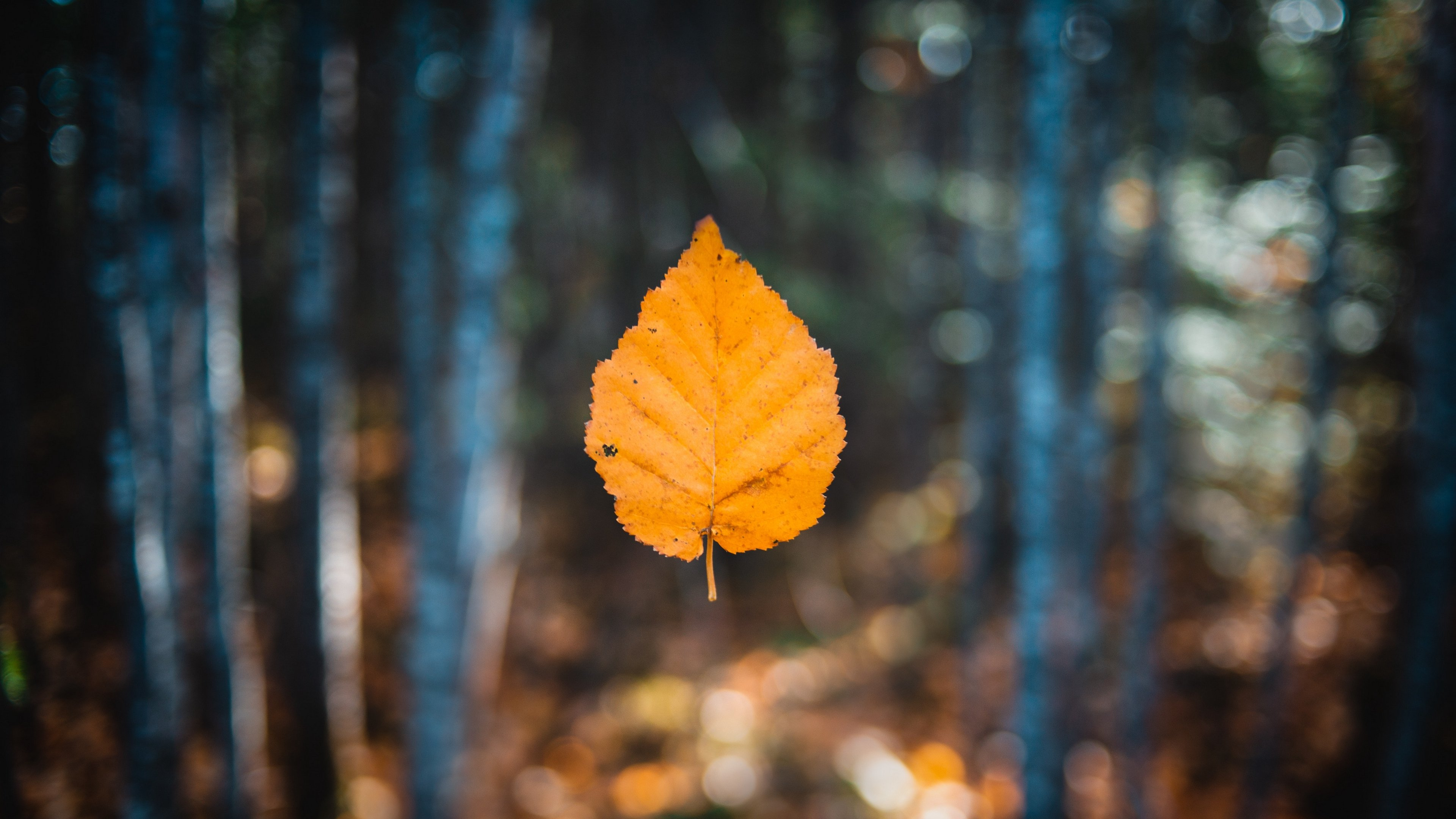 Leaf 4k Wallpapers For Your Desktop Or Mobile Screen Free