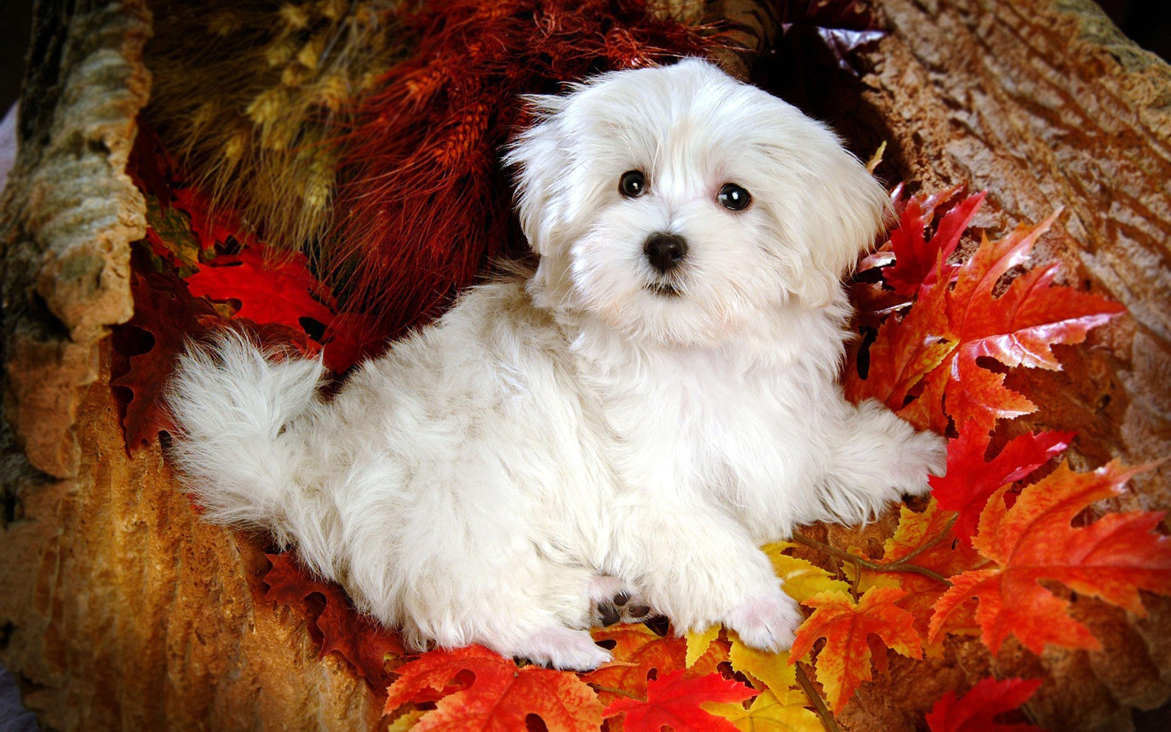 White Cute Dog 4k Wallpaper