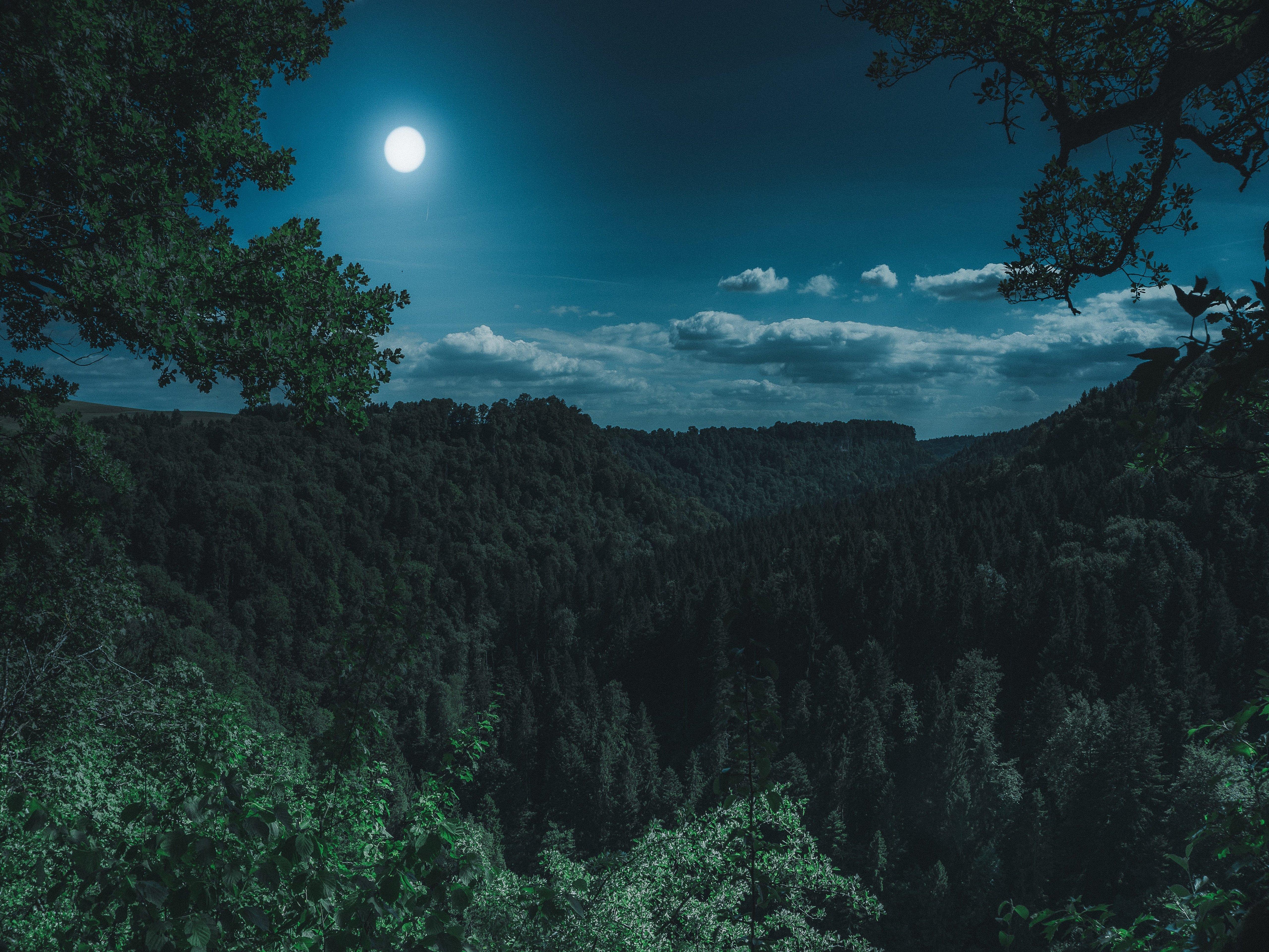 Full Moon Night 4k Wallpaper