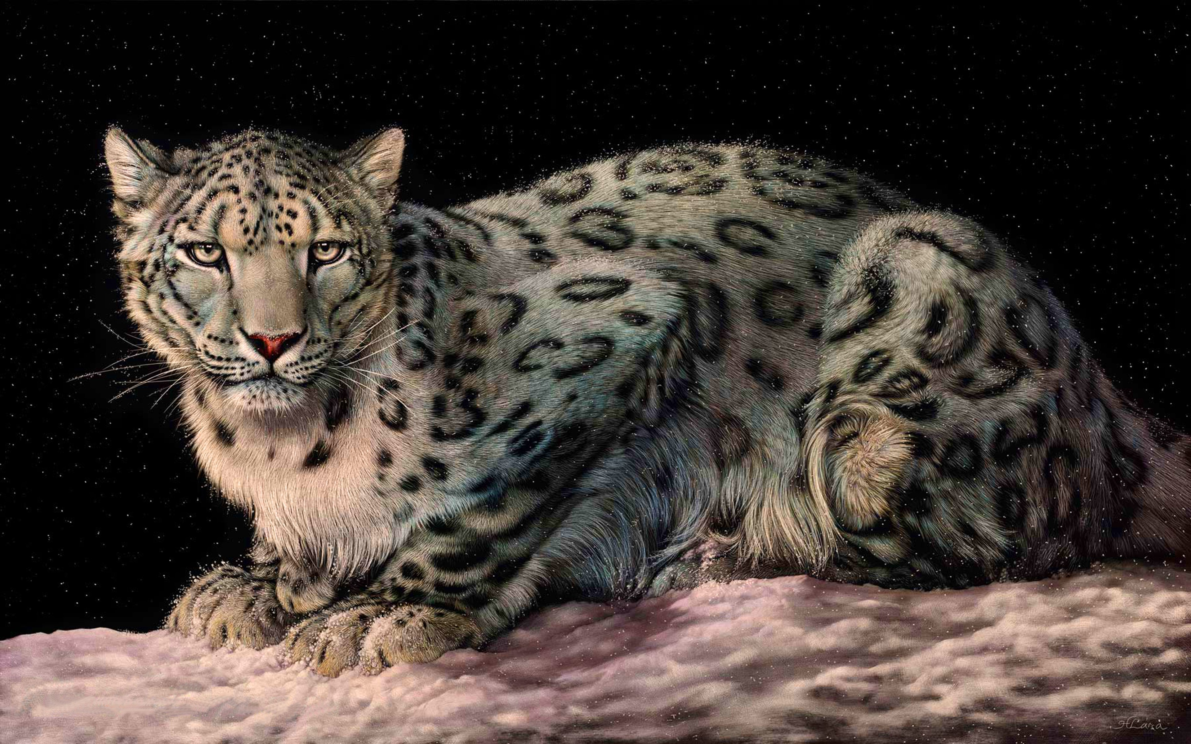 Leopard 4k Wallpapers For Your Desktop Or Mobile Screen Free And Easy To Download