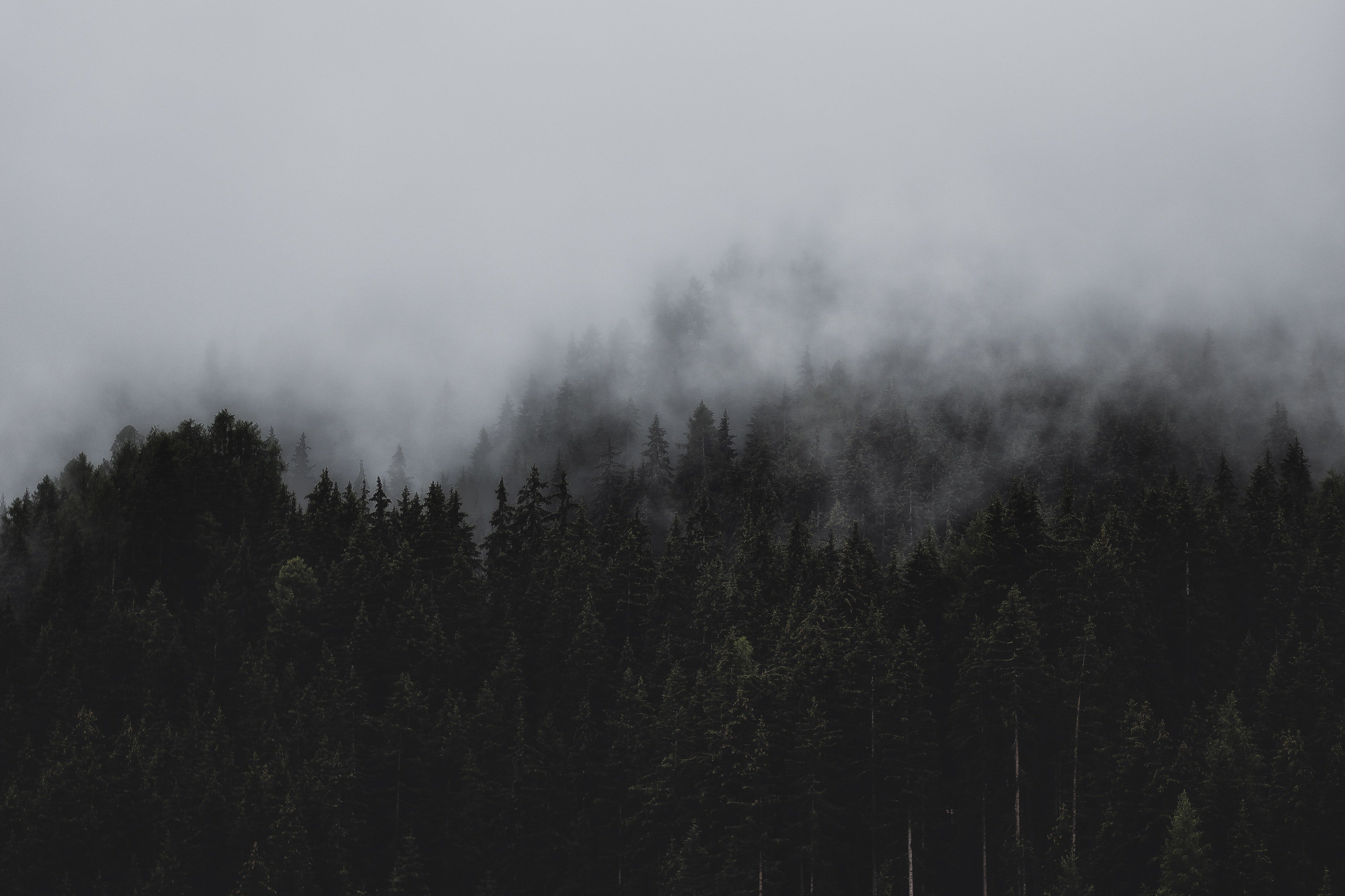 Black 4k Wallpapers For Your Desktop Or Mobile Screen Free