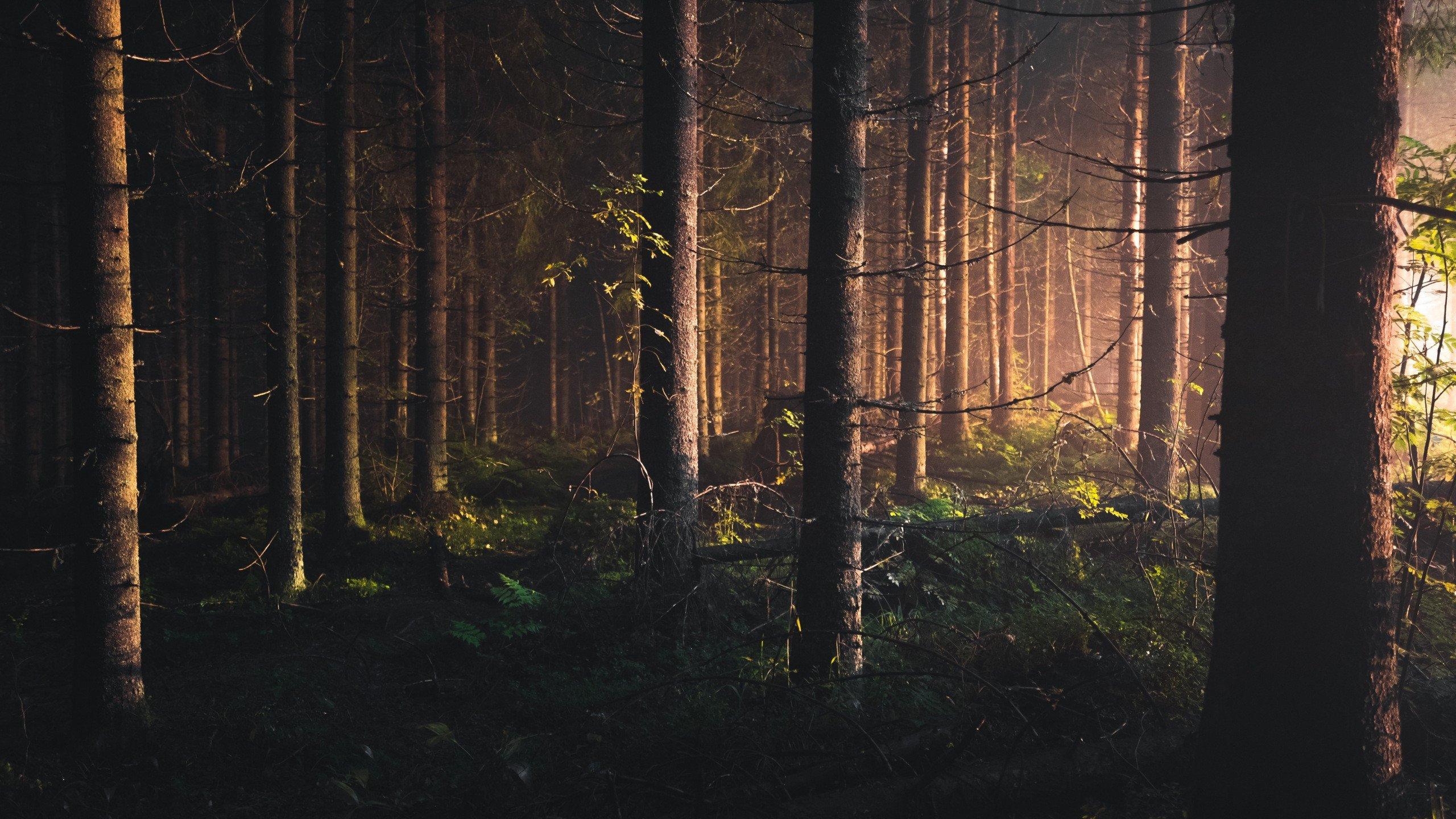 Unduh 5200 Koleksi Wallpaper Hd Forest Gratis Terbaik