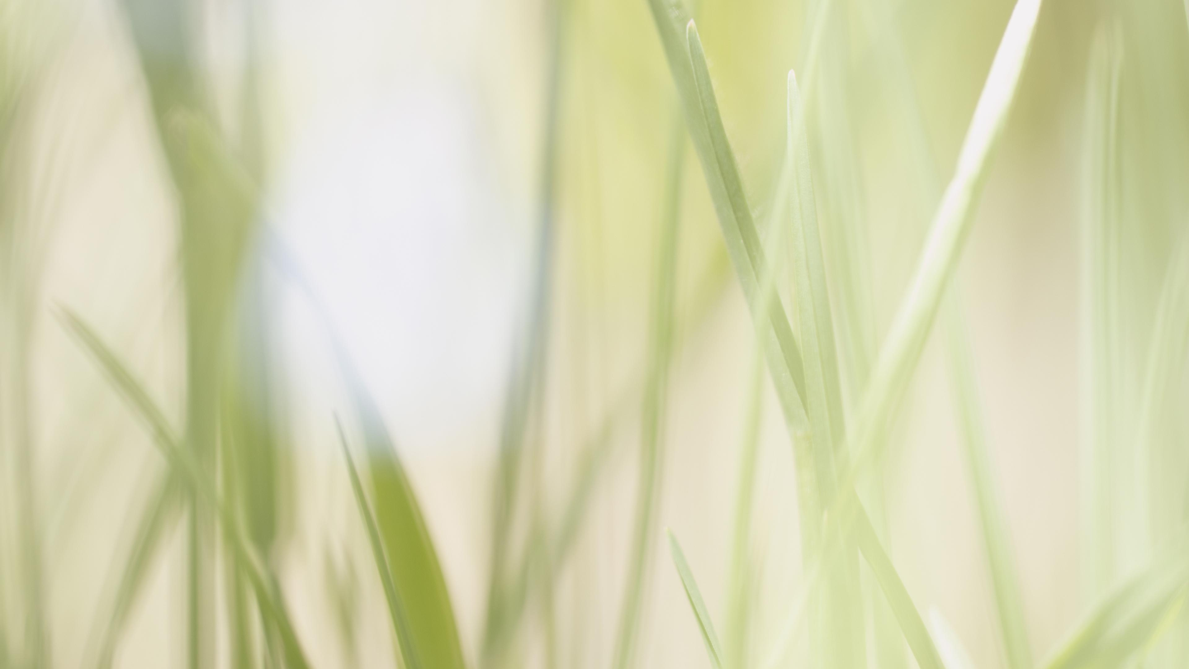 Grass 4k Wallpapers For Your Desktop Or Mobile Screen Free