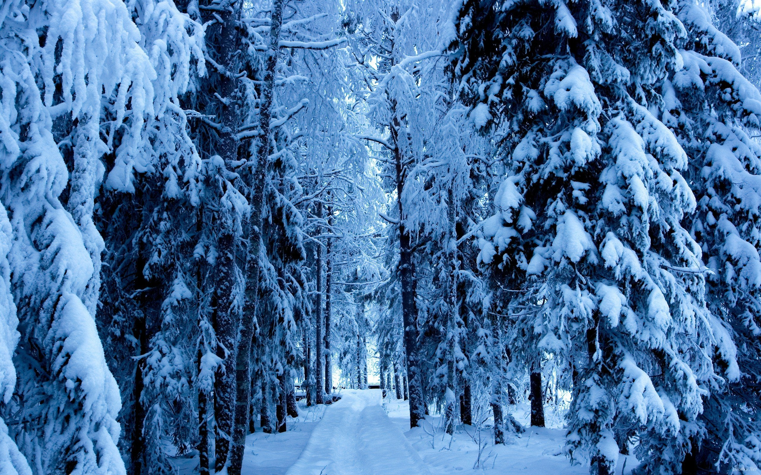 Snow Forest Hd Wallpaper