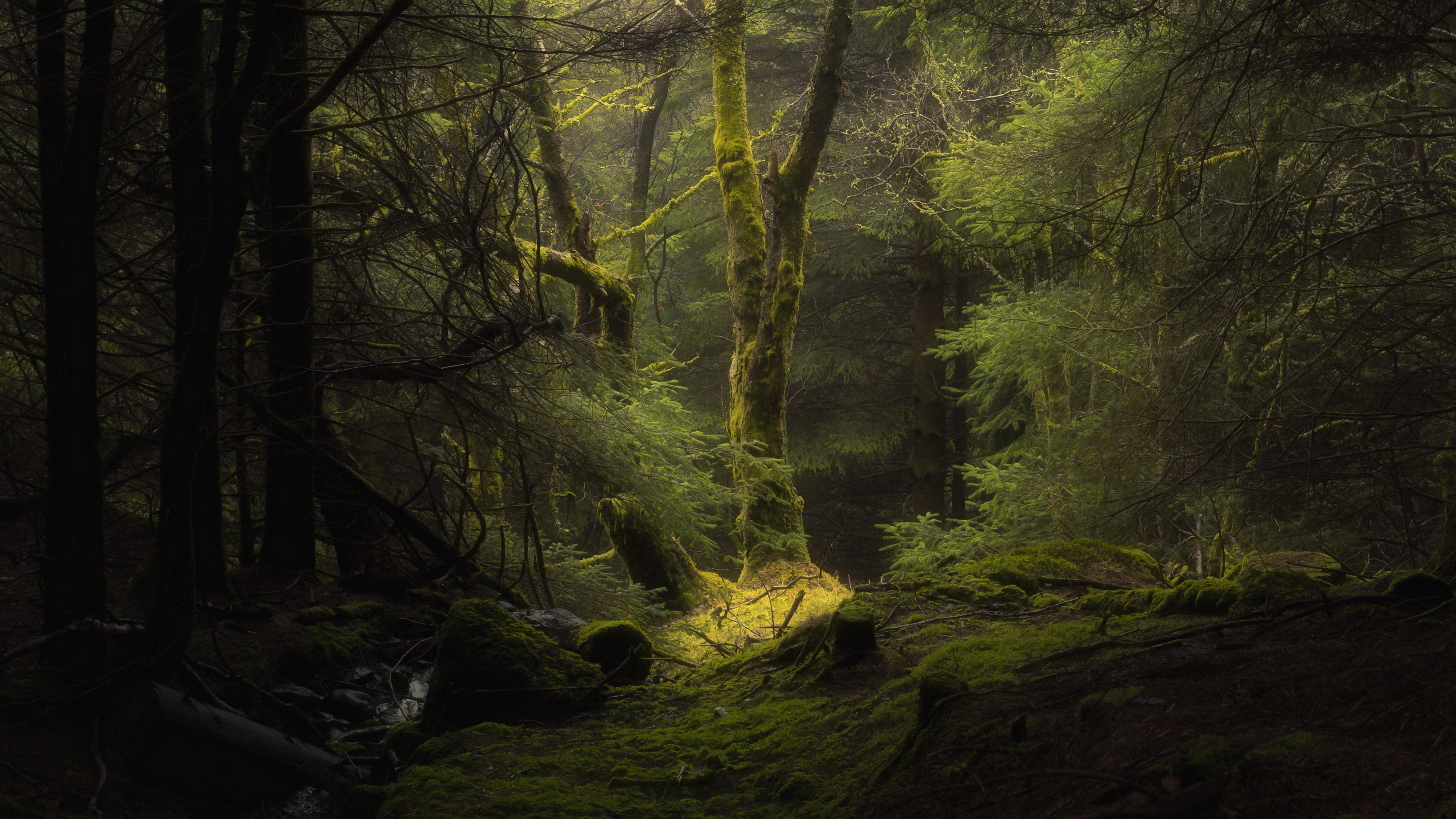Forest Fog Trees 4k Wallpaper