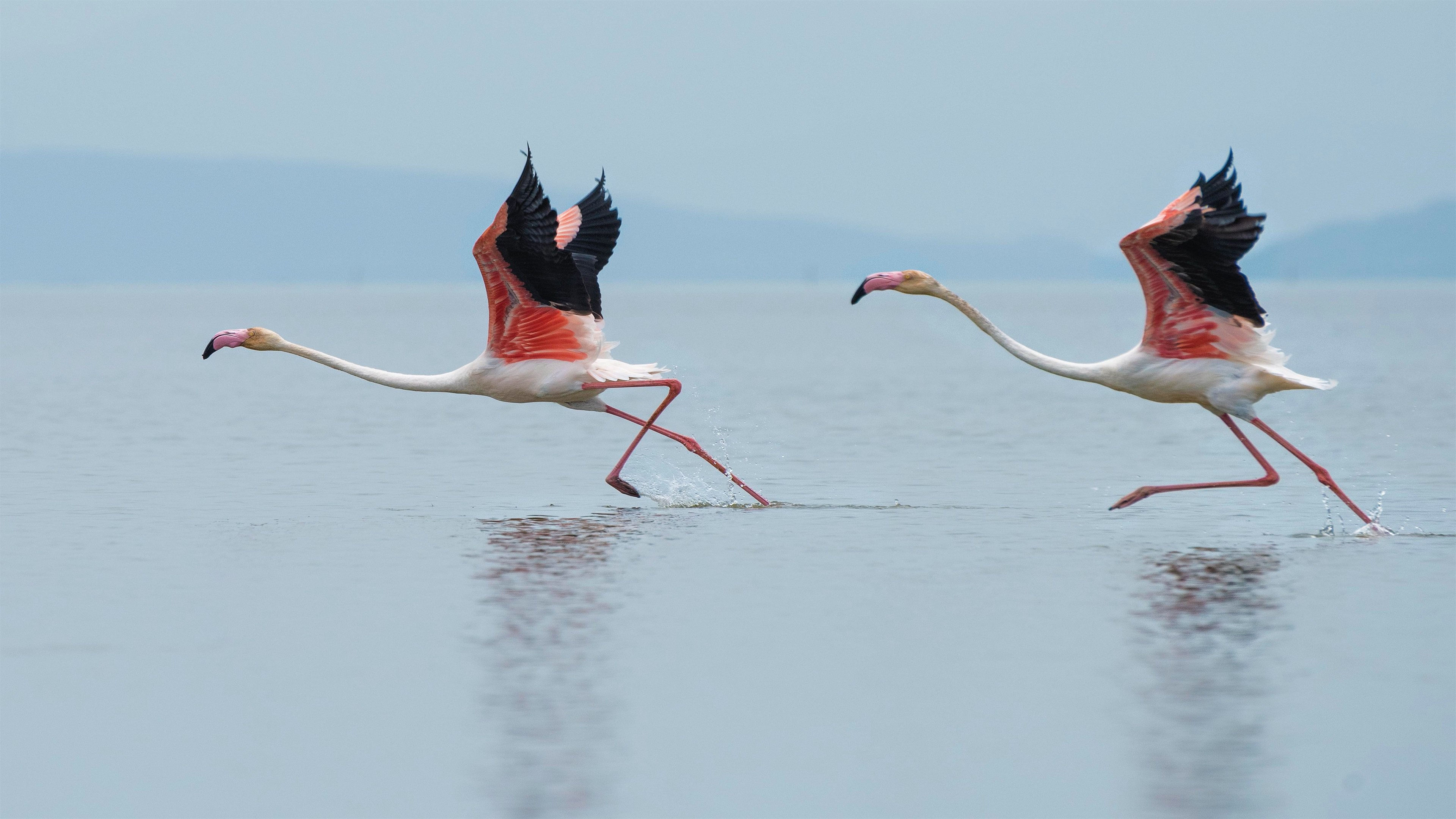 Flamingos 4k Wallpapers For Your Desktop Or Mobile Screen Free And